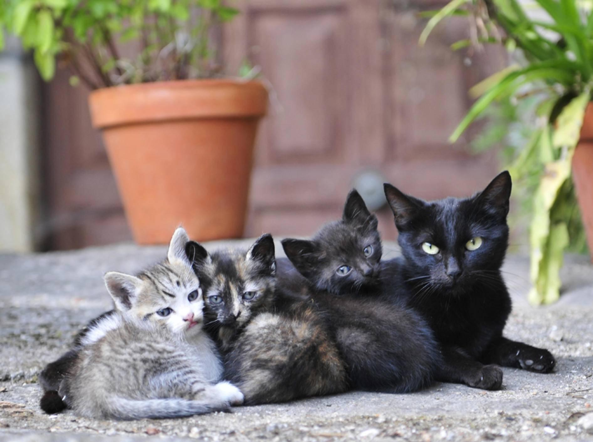 Diese kleinen Kätzchen müssen noch viel von ihrer Mutter lernen – Shutterstock / avarand