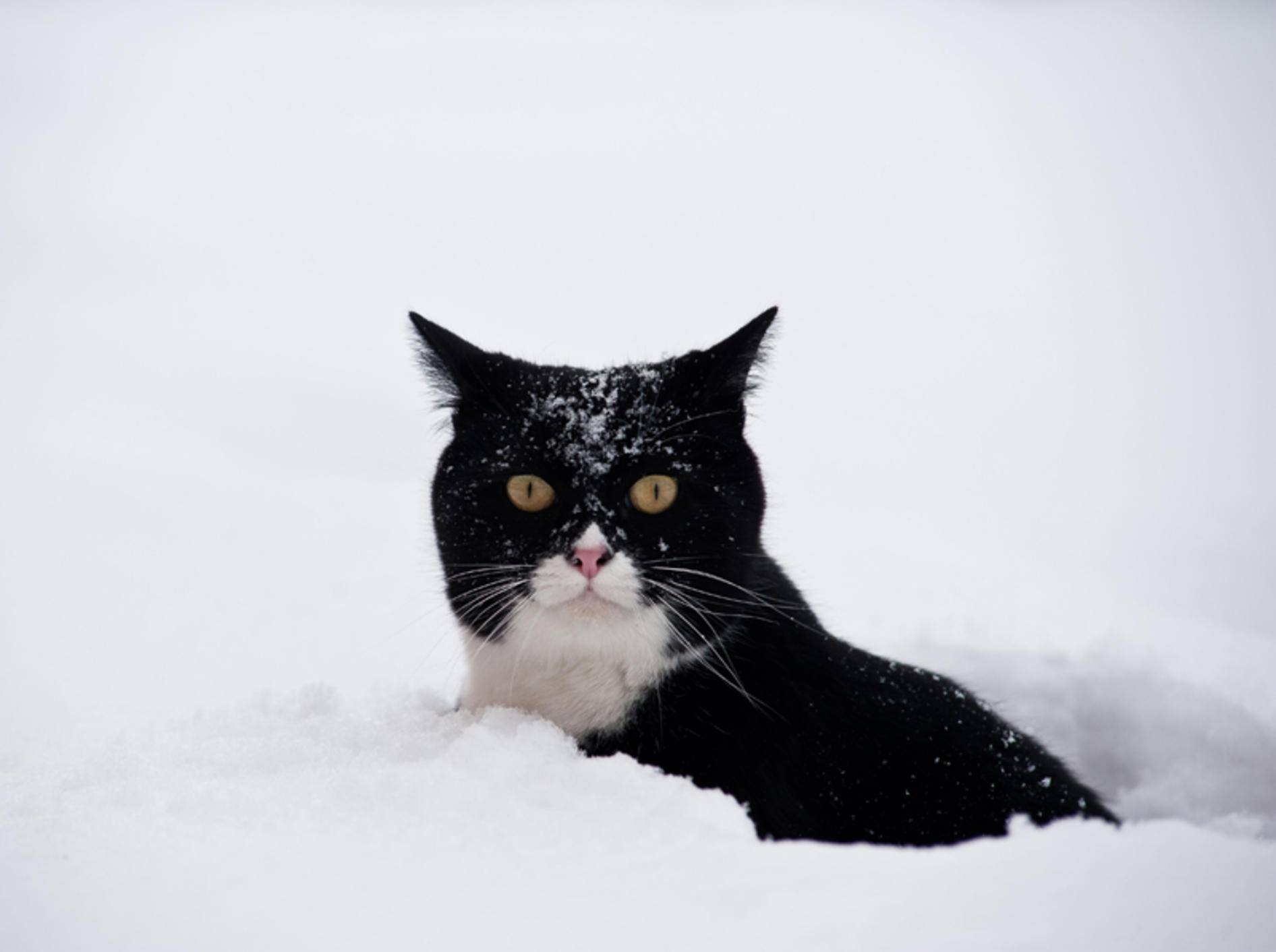 Brauchen Katzen im Winter anderes Futter als sonst? – Shutterstock / pio3