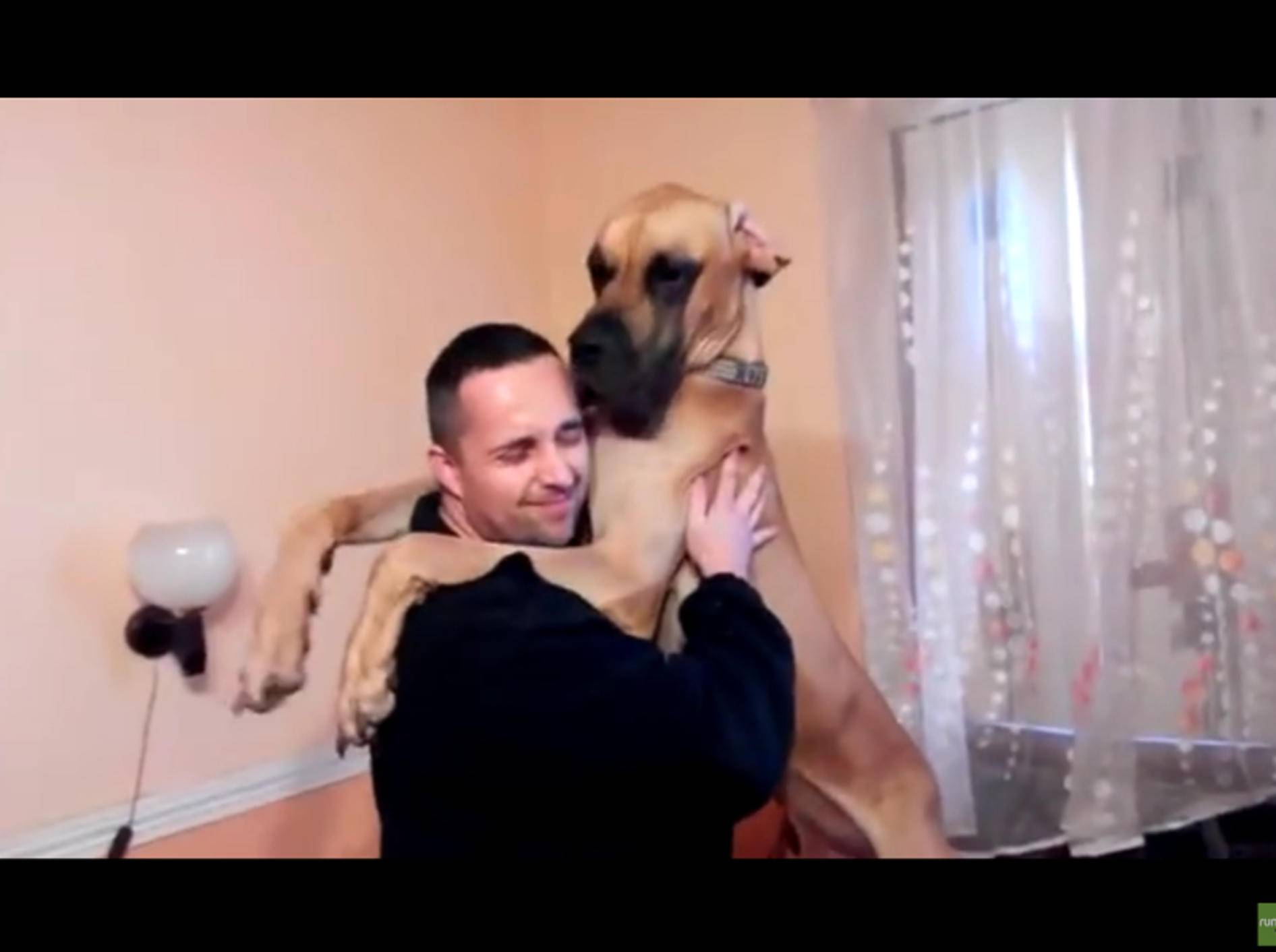 Wie groß eine Dogge werden kann, zeigt sich spätestens dann, wenn sie jemanden aufrecht umarmt – YouTube / Rumble Viral
