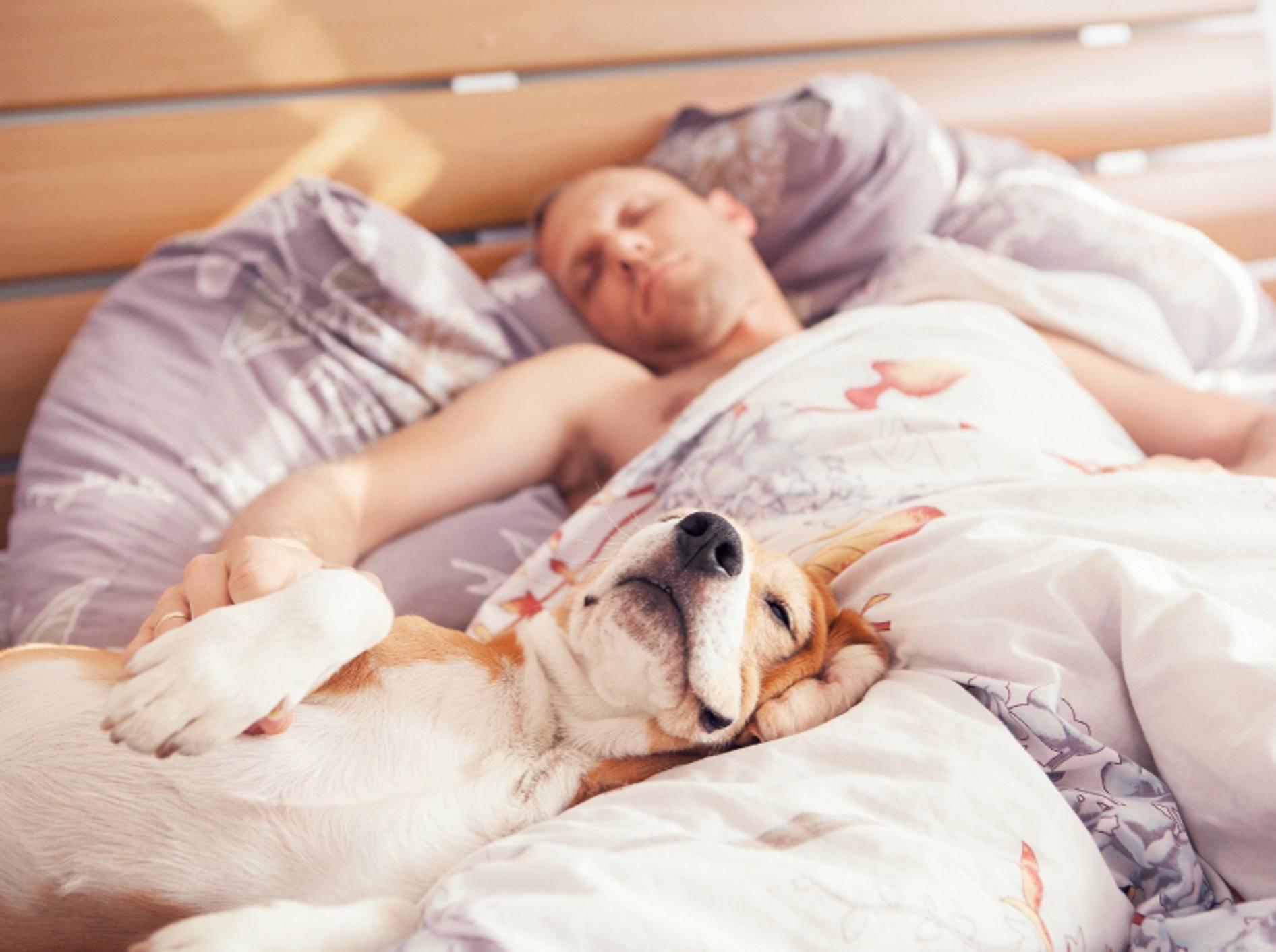 Sie haben verschlafen? Neeeeein, Sie mussten noch mit dem Hund raus und sind deswegen spät dran... – Shutterstock / Soloviova Liudmyla
