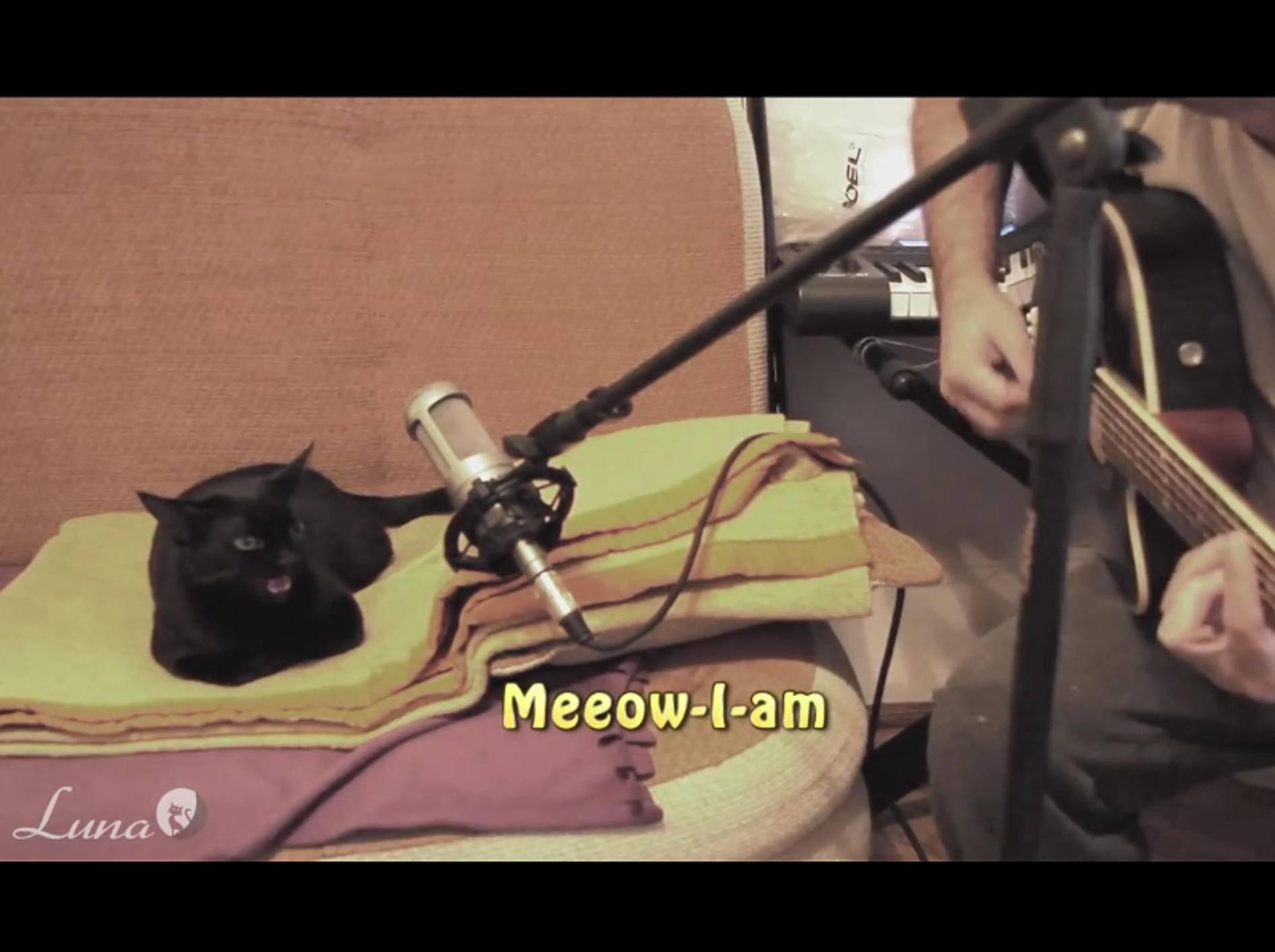 Luna kann wirklich singen. Auf jeden Fall weiß sie an den richtigen Stellen zu miauen – YouTube / Dovlecel and Luna the Singing cat