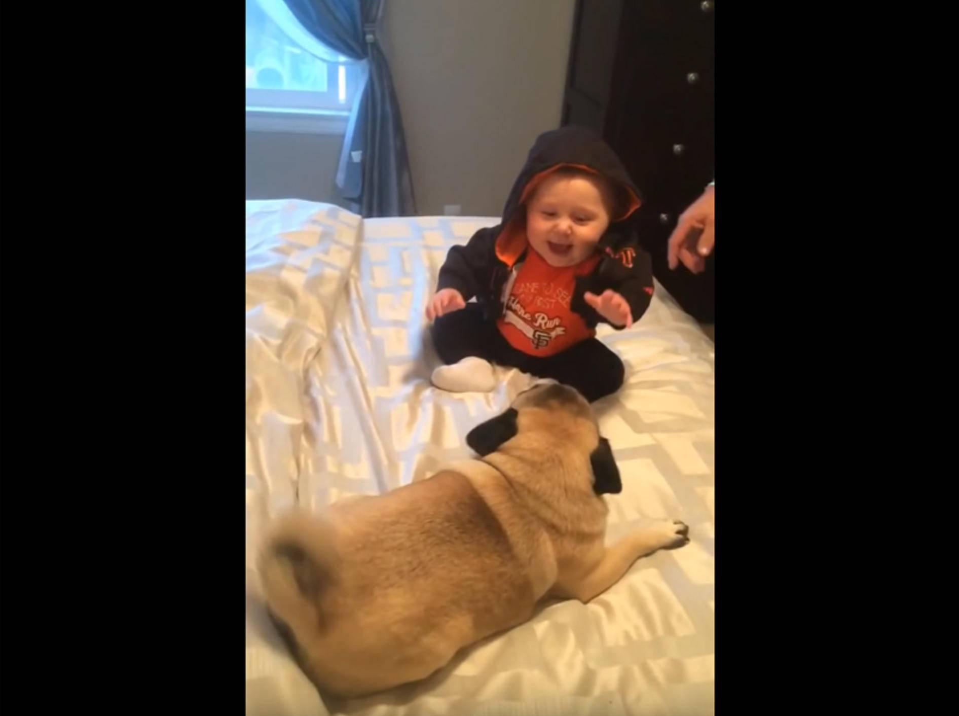 Zwei Möpse spielen mit Baby – YouTube / Shannonrosegreen