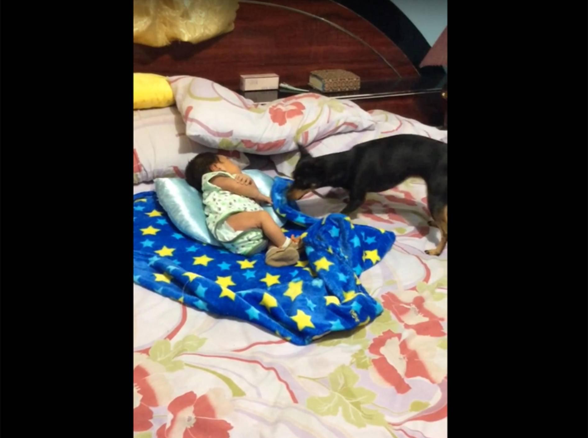Fürsorglicher Hund deckt Baby liebevoll zu – YouTube / ViralHog