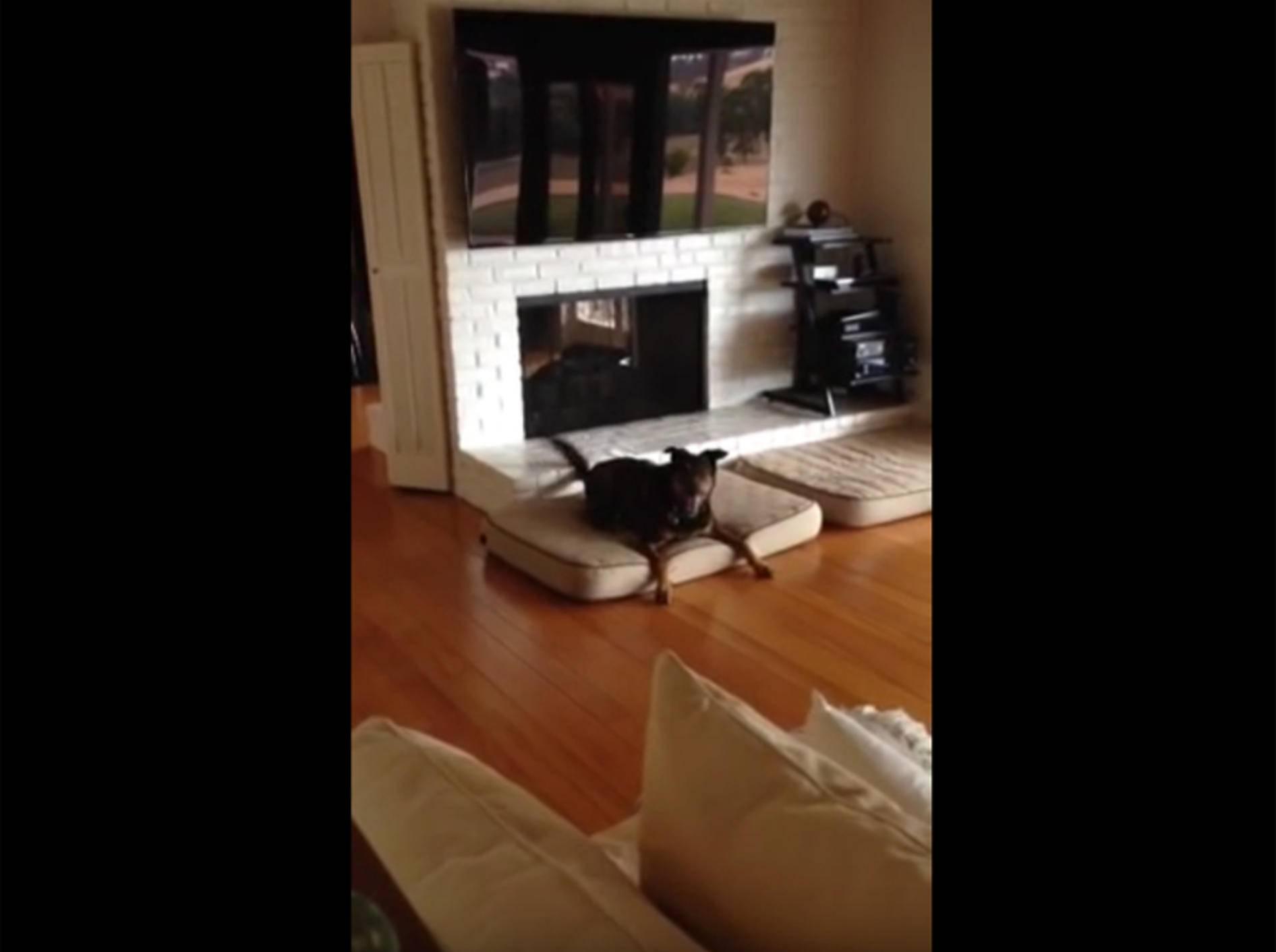 Hund hat seinen 10. Geburtstag und ist tierisch aufgeregt – YouTube / Jessica Pressman
