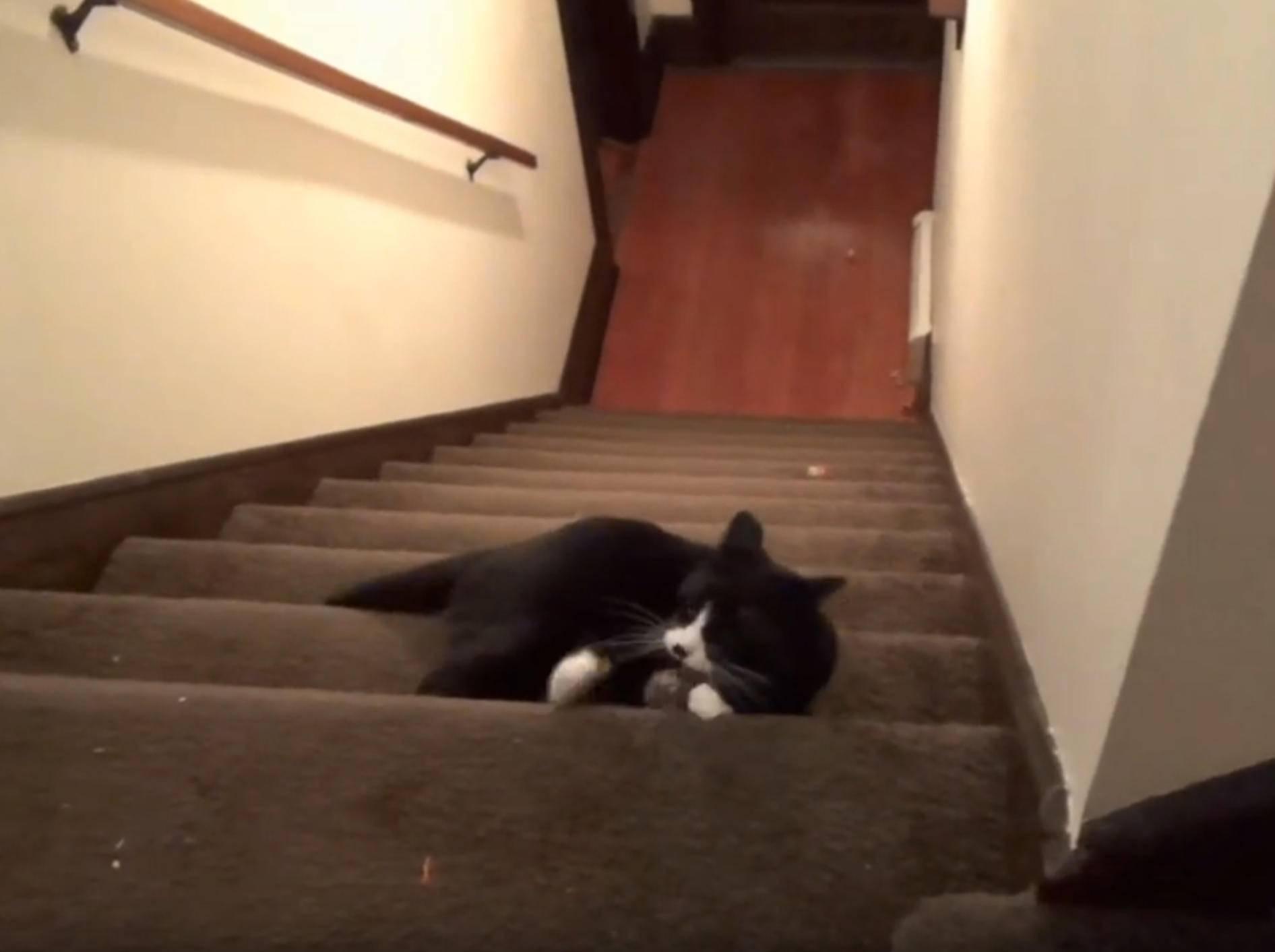 Kater Roodi hat seine wilden fünf Minuten – YouTube / DrNworb's KitsCats