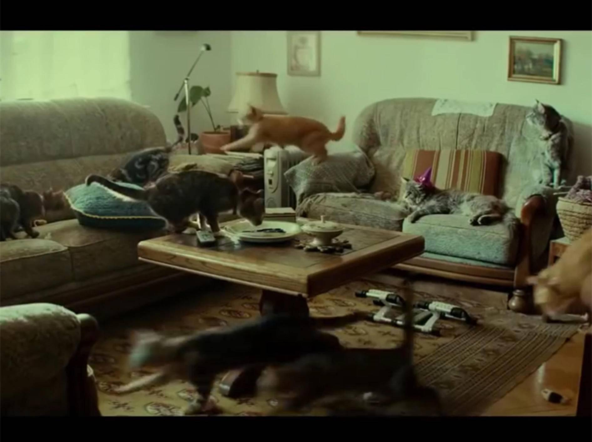 Japanischer Werbespot zeigt Katze allein zu Haus – YouTube / Animals Love