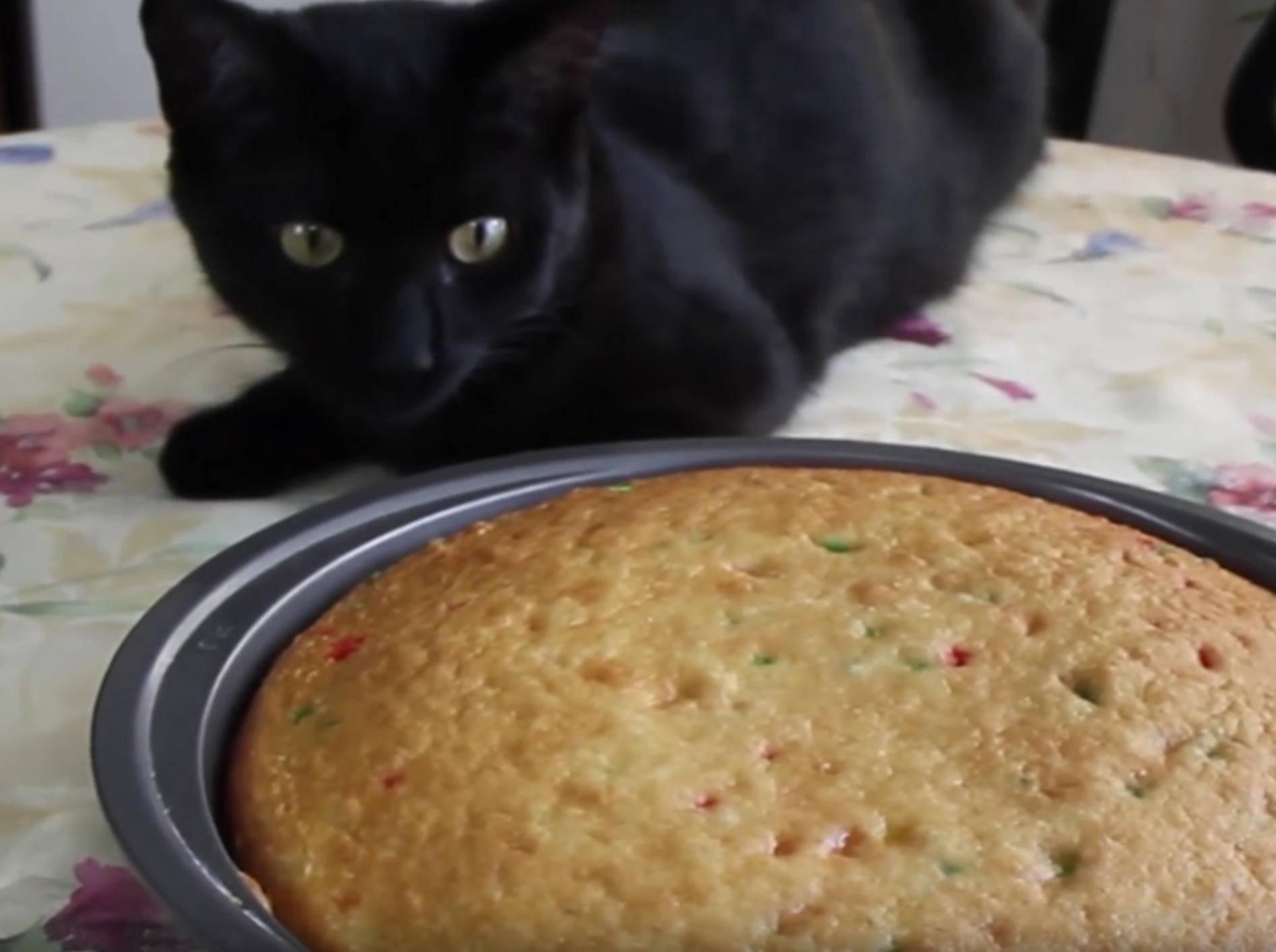 """Nimm das, du süßes Gebäck!"": Katze ruiniert Kuchen – YouTube / Kitty Cat Bliss"