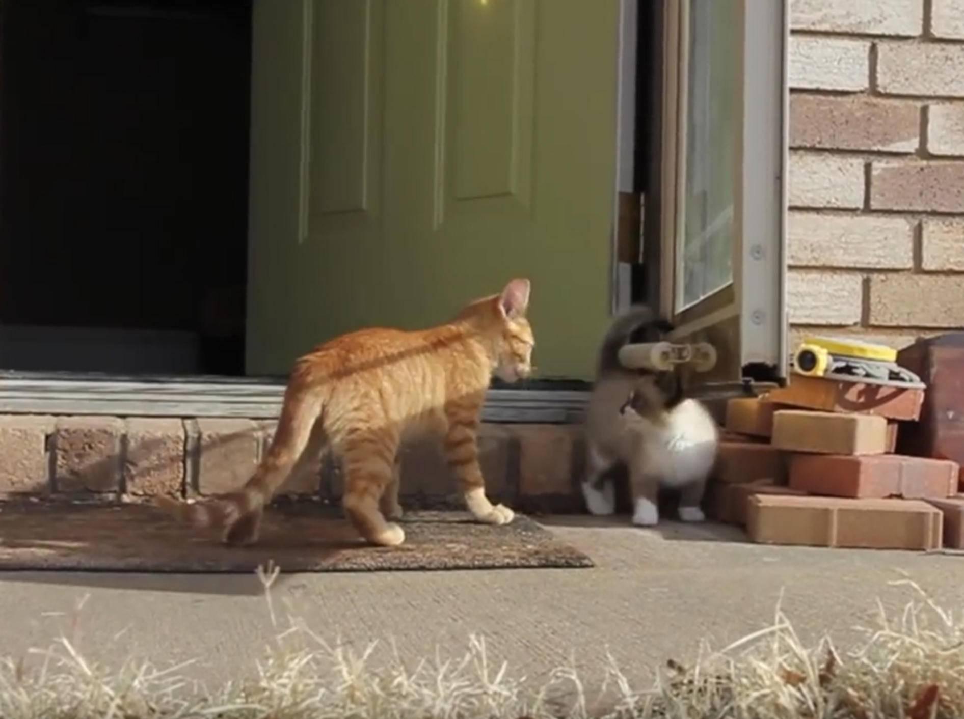 Kätzchen Skidmark und Daenerys: Draußen spielen ist klasse! – YouTube / E511