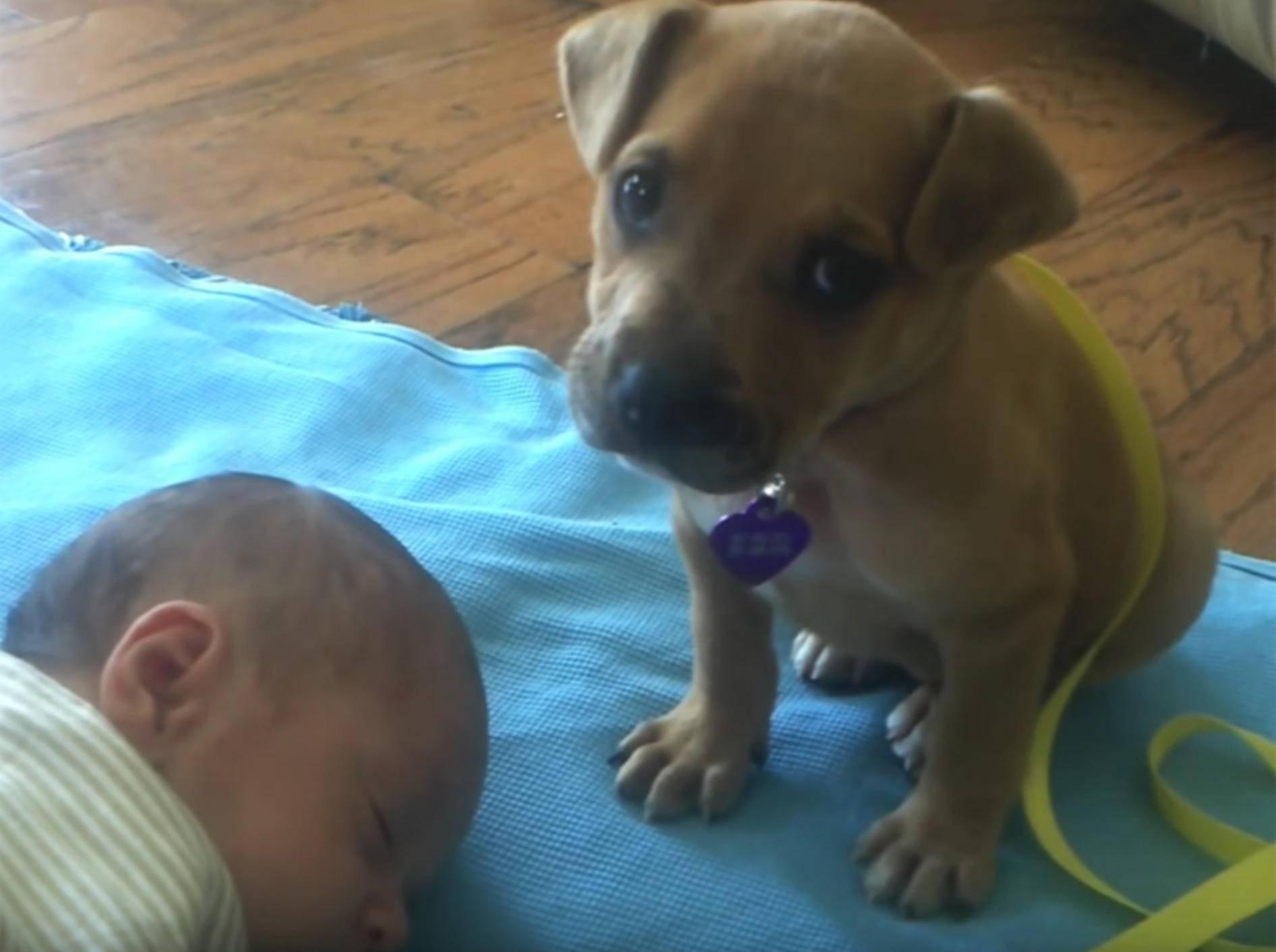 Schläfriger Welpe nickt beim Babysitten ein – YouTube / xcvbnmxcvb