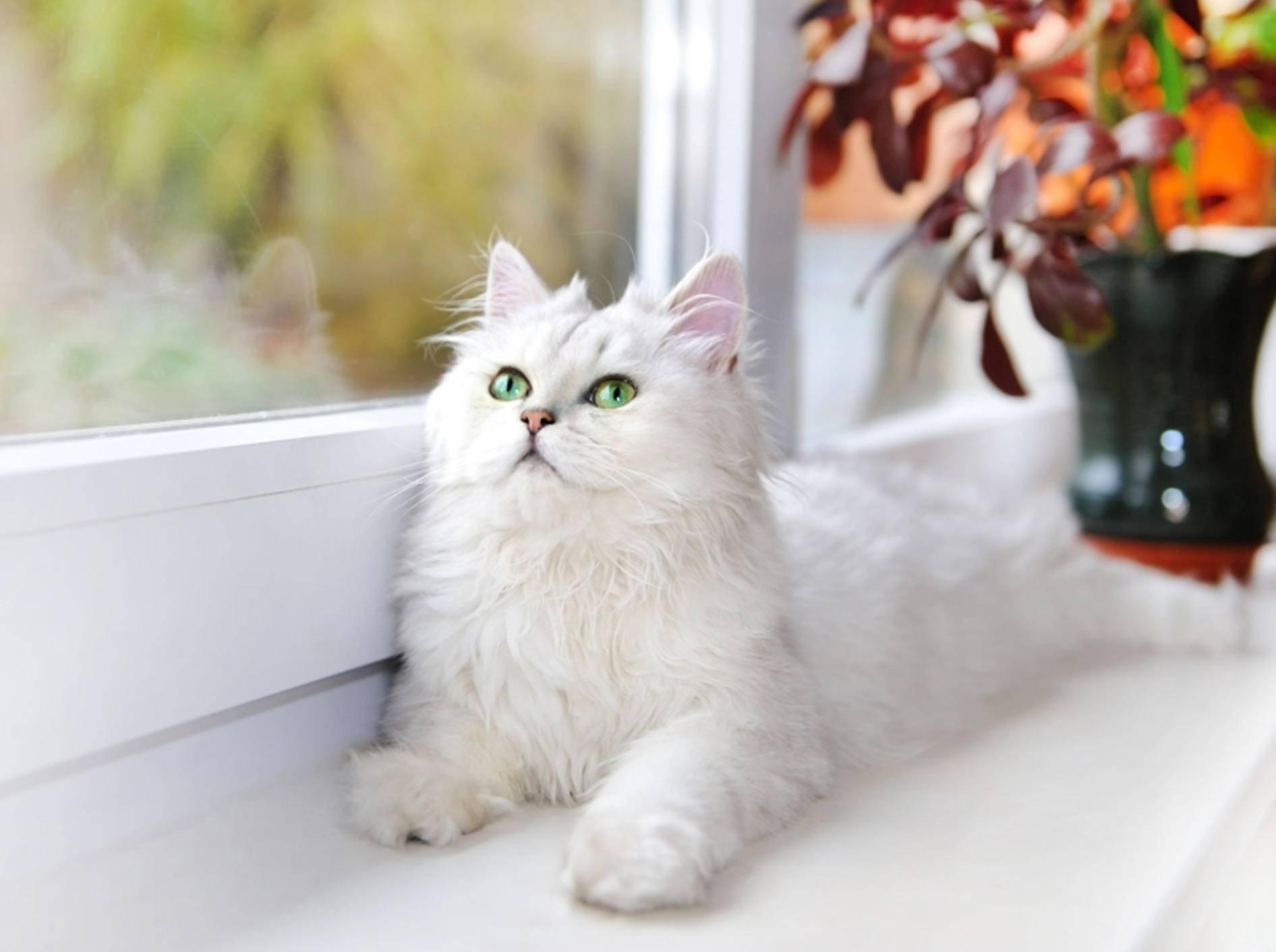 """""""Oh! Ein Vogel! Mist, zu weit weg ... Der wird gleich angekeckert!"""", denkt diese Katze – Shutterstock / Nata789"""