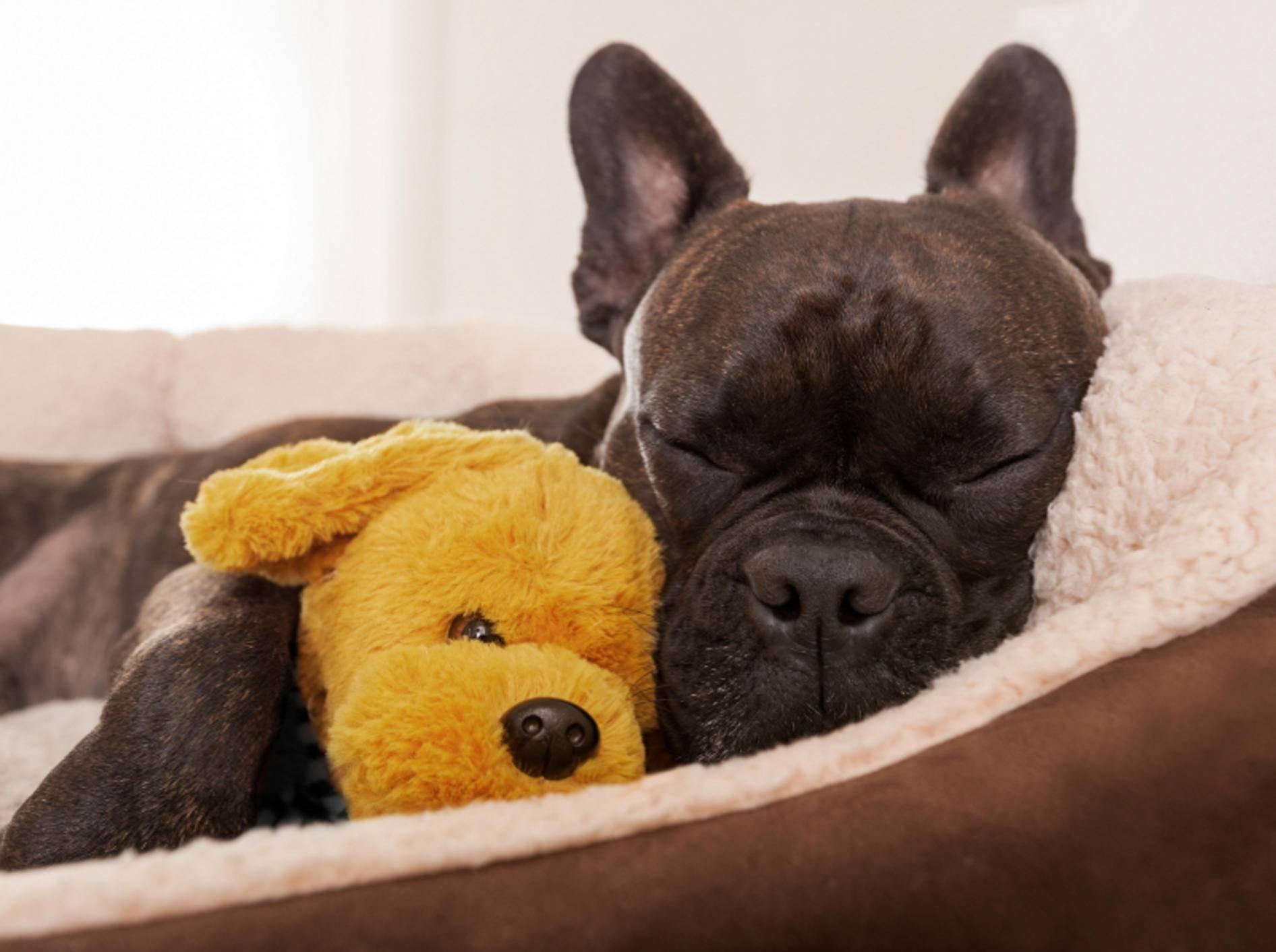Stellen Sie Ihrem Hund eine gemütliche Schlafgelegenheit wie etwa einen Hundekorb oder ein Hundebett zur Verfügung – Shutterstock / Javier Brosch