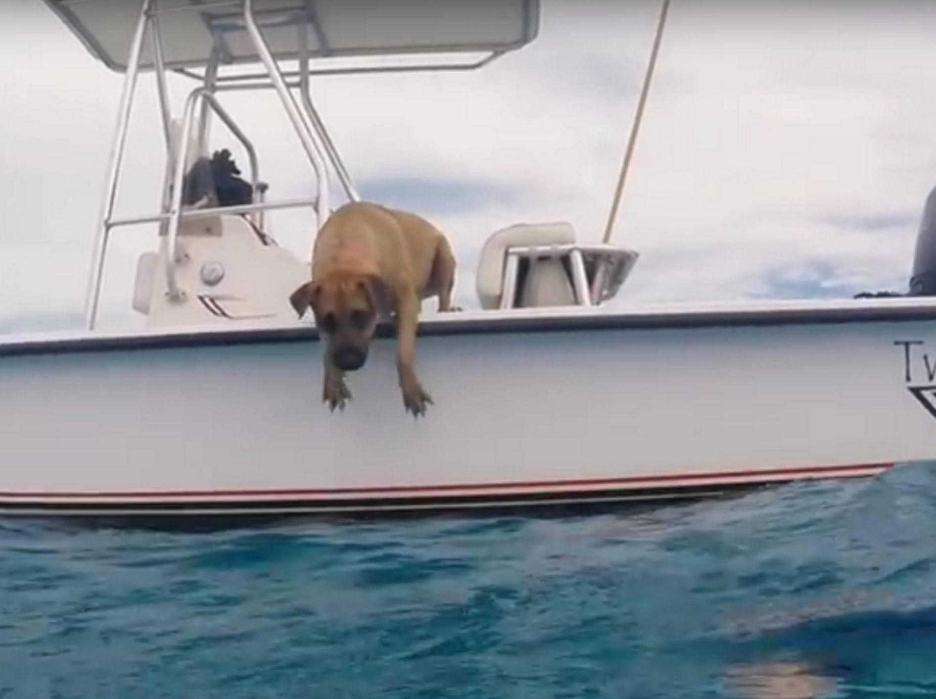 Mutiger Sprung! Sandy will unbedingt zu den Delfinen ins Wasser und springt ins Meer – YouTube / Joe Noonan