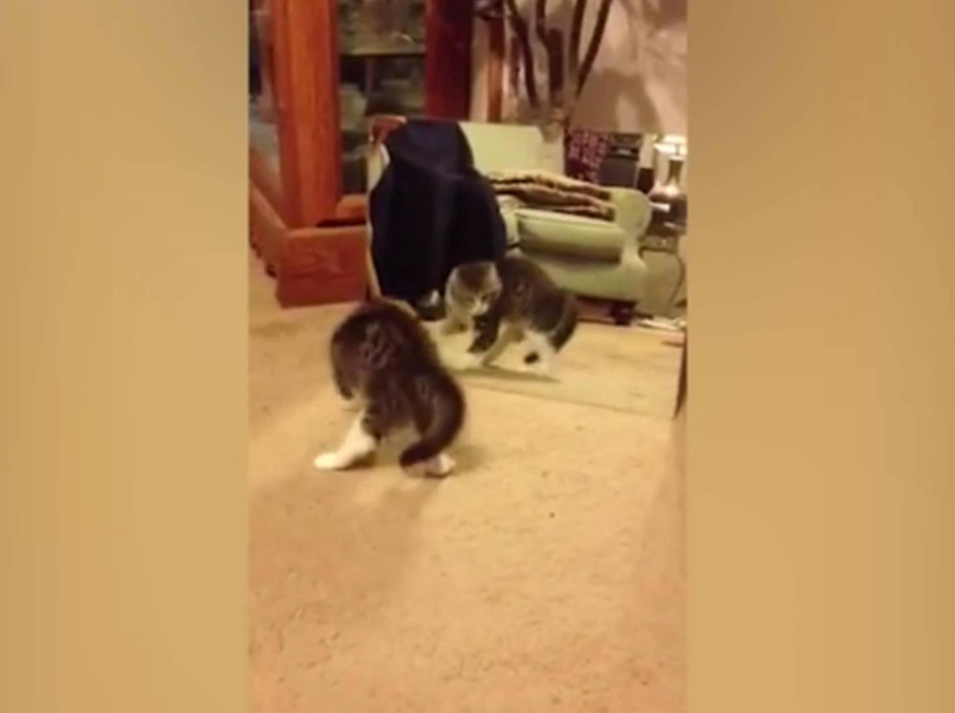 Diese kleine Katze erschreckt sich ziemlich vor ihrem Spiegelbild – YouTube / Kyoot Animals