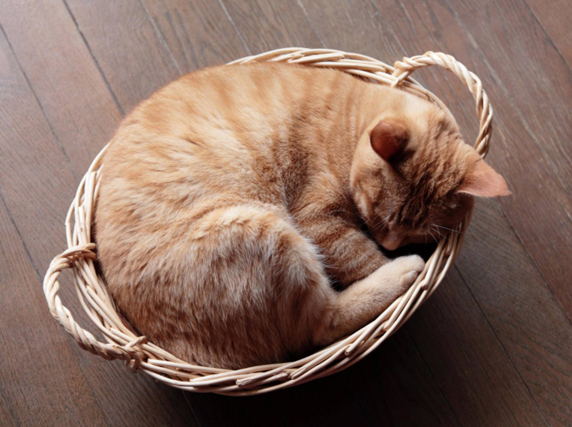 Katzen befinden manchmal die seltsamsten Schlafplätze als bequem – Shutterstock / haru