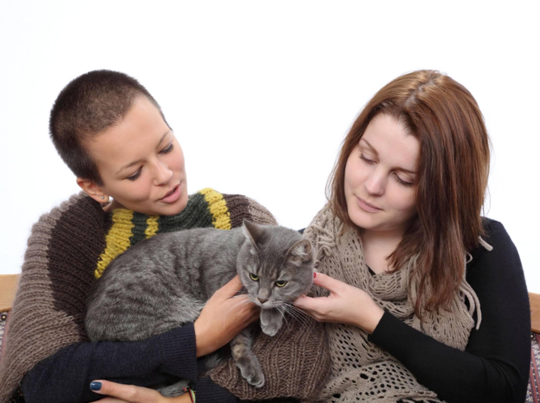 Der Katzensitter sollte sowohl dem Besitzer als auch der Katze gefallen; ein Kennenlernen ist das A und O – Shutterstock / sima