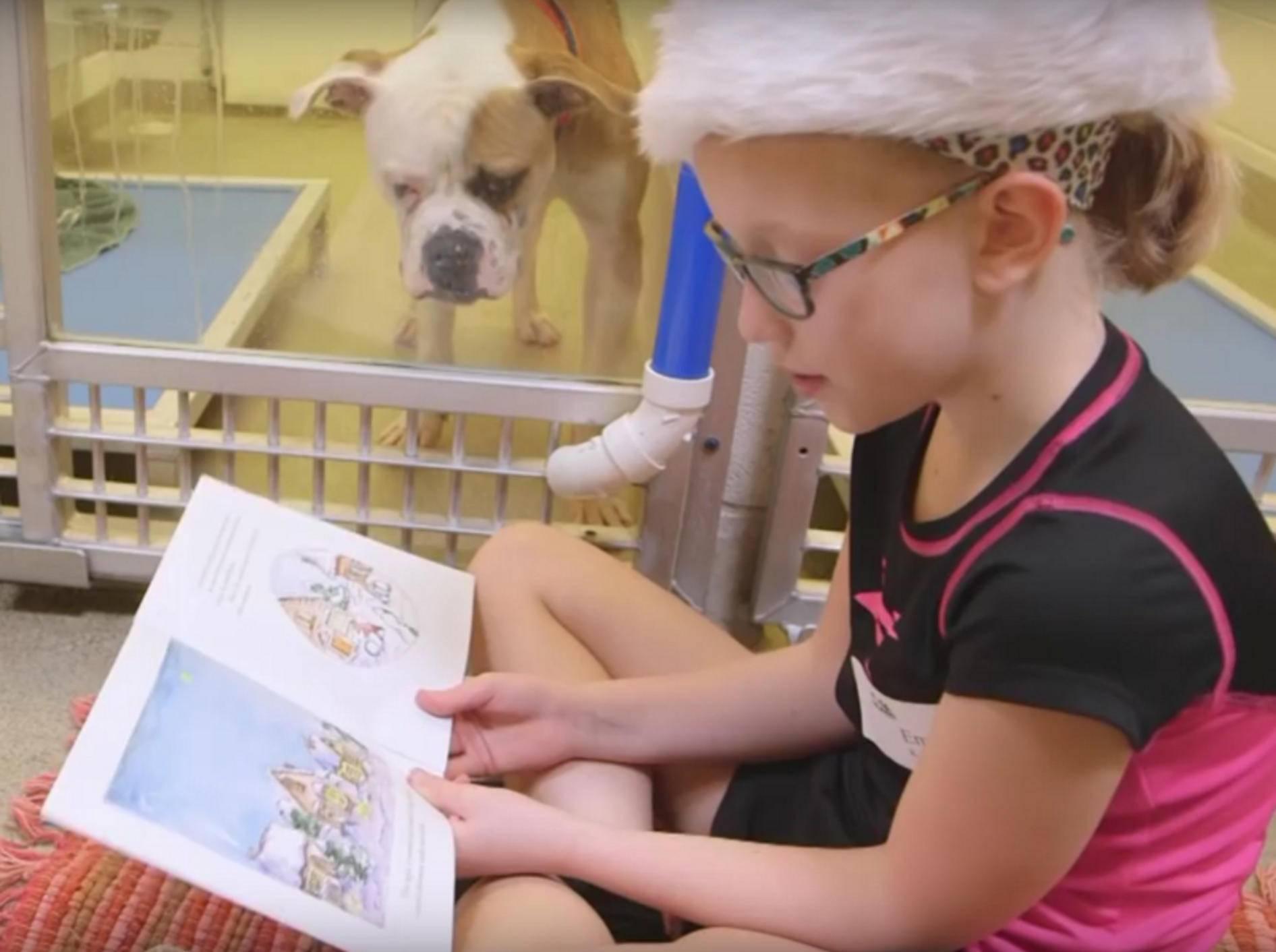 Goldig, wie der Tierheimhund dem kleinen Mädchen beim Lesen zuhört – YouTube / hsmolovesanimals