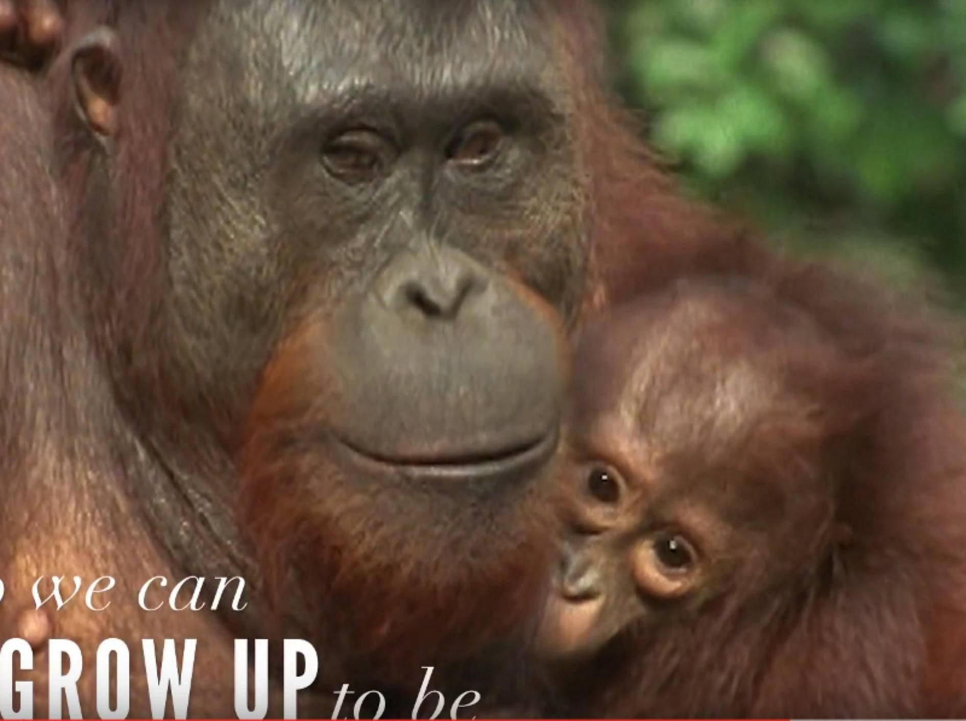Die besondere Bindung zwischen Mutter und Kind zeigt sich auch, oder vor allem, in der Tierwelt auf beeindruckende Weise – YouTube / The Dodo