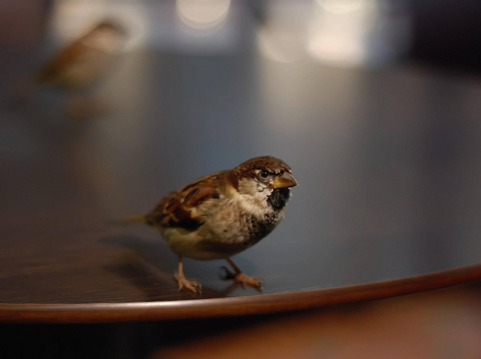 Ist ein Wildvogel in die Wohnung geflogen, findet er mit ein wenig Hilfe von alleine wieder heraus – Shutterstock / Paula kc