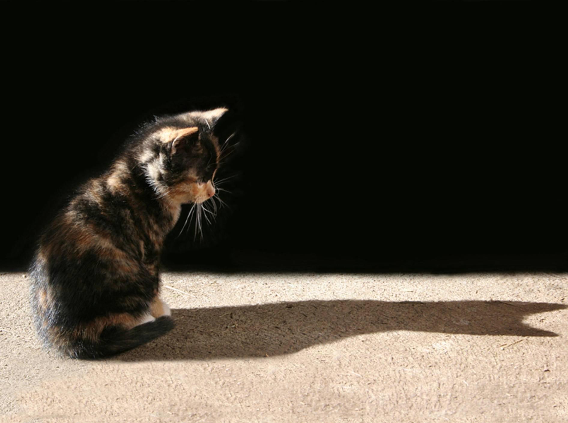 """Diese kleine Glückskatze findet: """"Jede Katze ist etwas Besonderes!"""" – Shutterstock / Joy Brown"""