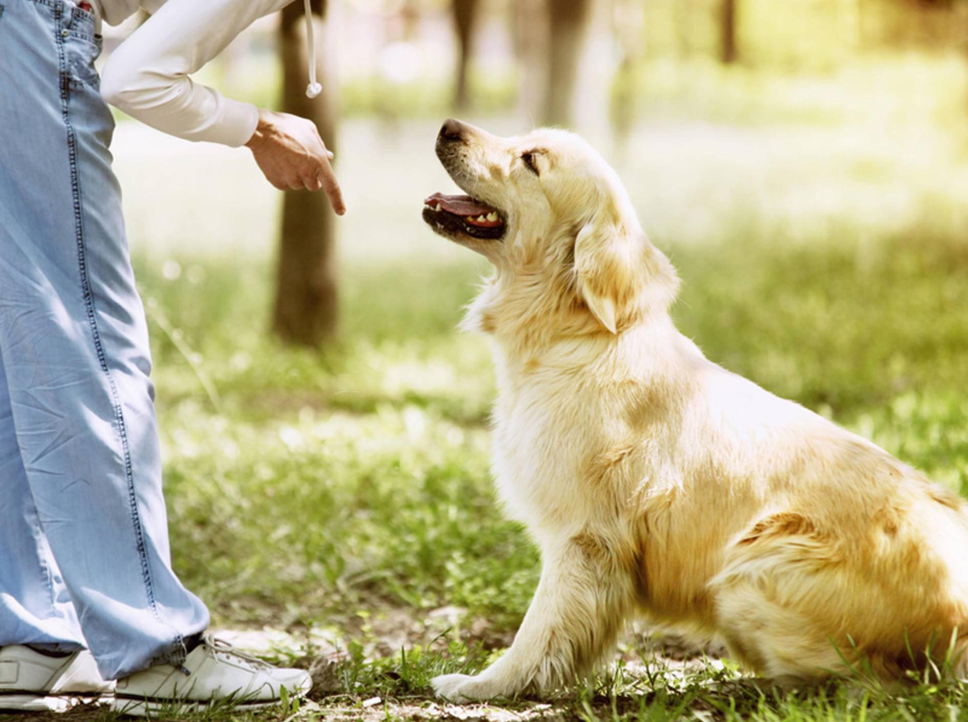 Mit positiver Verstärkung soll die Hundeerziehung leichter funktionieren – Shutterstock / Soloviova Liudmyla