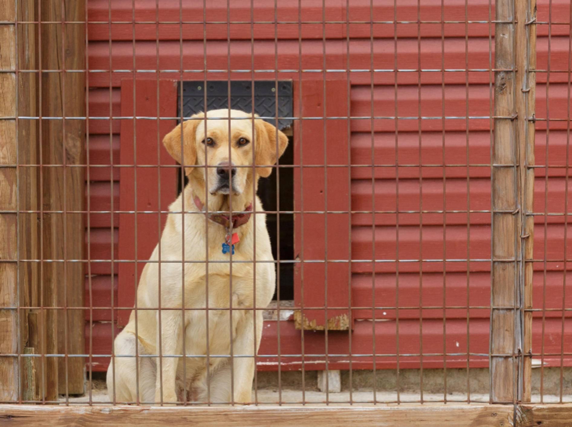 Ein Hundezwinger ist kein dauerhafter Platz für einen Hund, doch kann Ihre Fellnase hier sicher untergebracht werden, wenn Sie einmal länger nicht zuhause sind – Shutterstock /Dervin Witmer