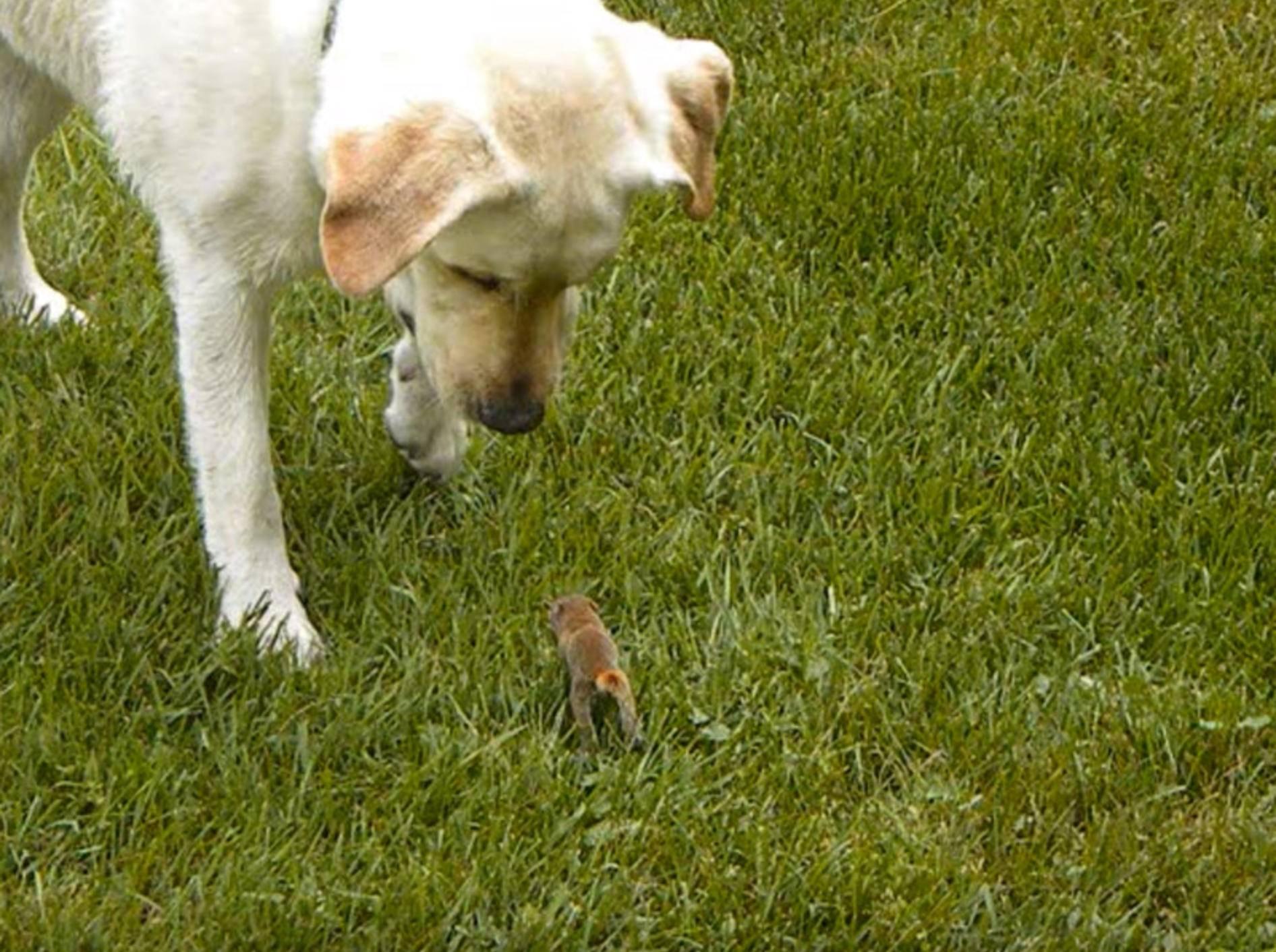 Zuckerschock: Hund spielt mit Baby-Eichhörnchen – Bild: YouTube / Abbey Harrison