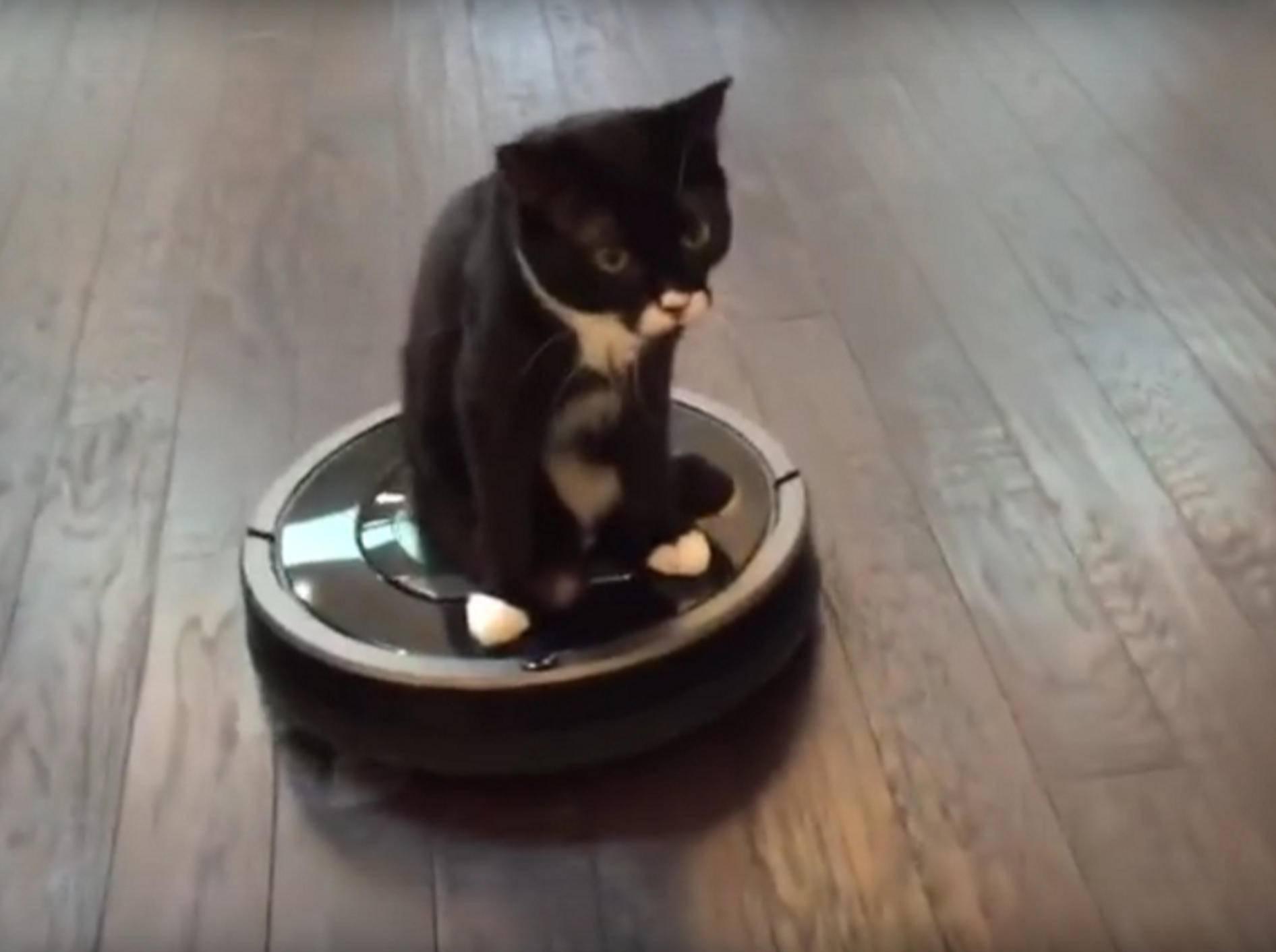 Kater Cassidy liebt den automatischen Staubsauger! – Youtube / TinyKittens HQ