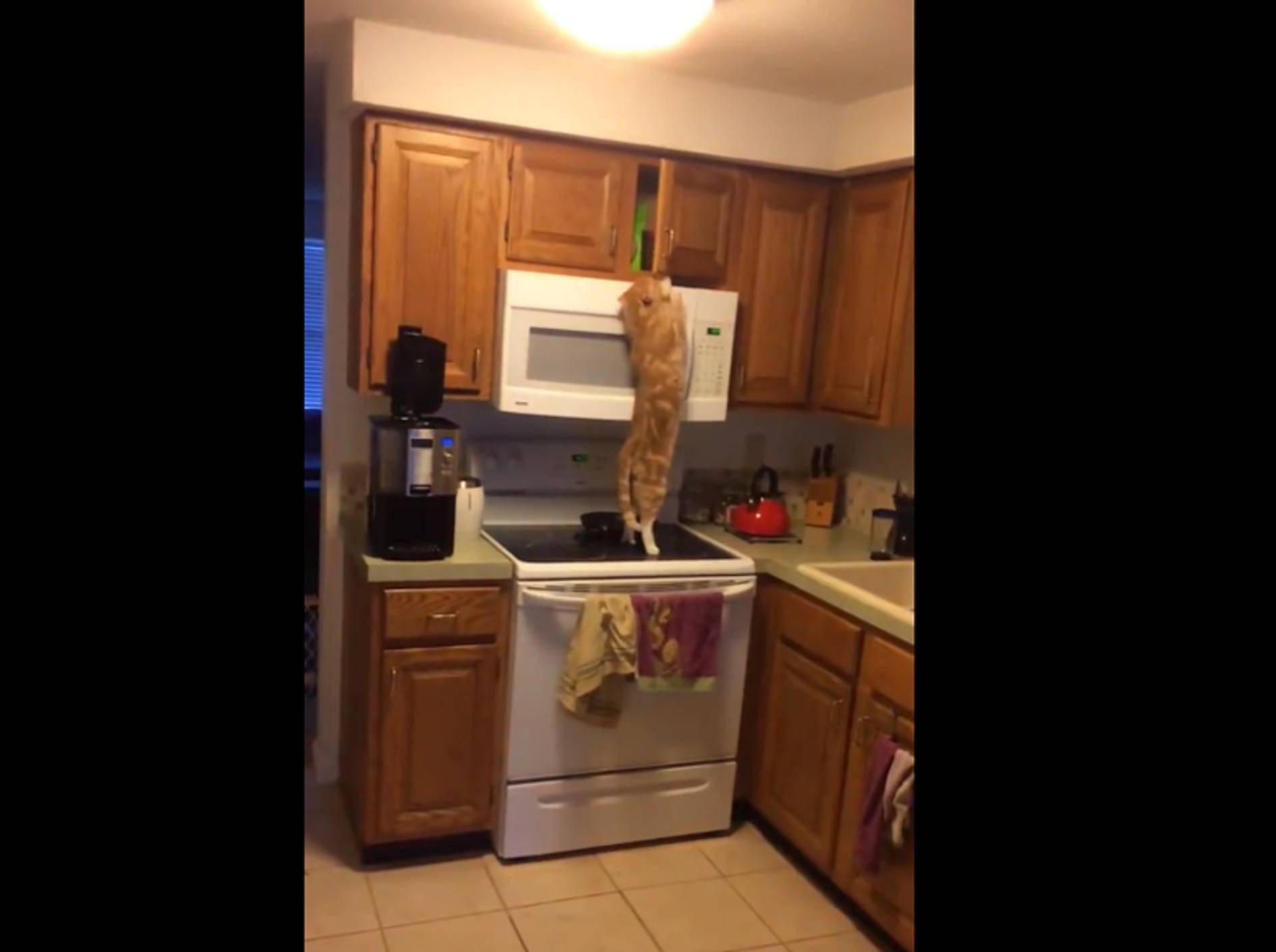 Schlaue Katze weiß, wo die Leckerlis versteckt sind – YouTube / Totally Awesome