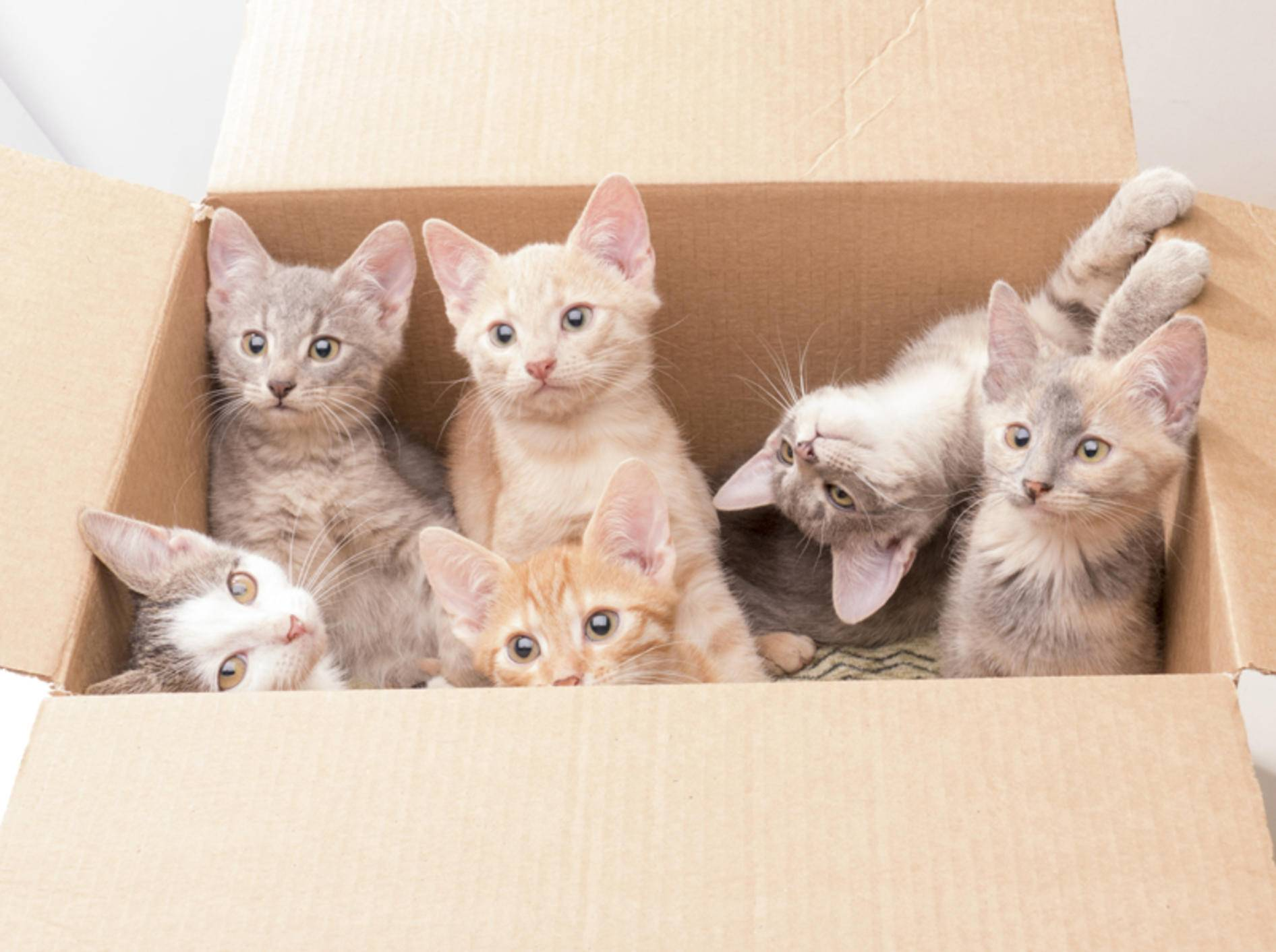 Ausgesetzte Katzenbabys in einem Karton: Wie kann man den kleinen Fellnasen helfen? – Shutterstock / Serega K Photo and Video