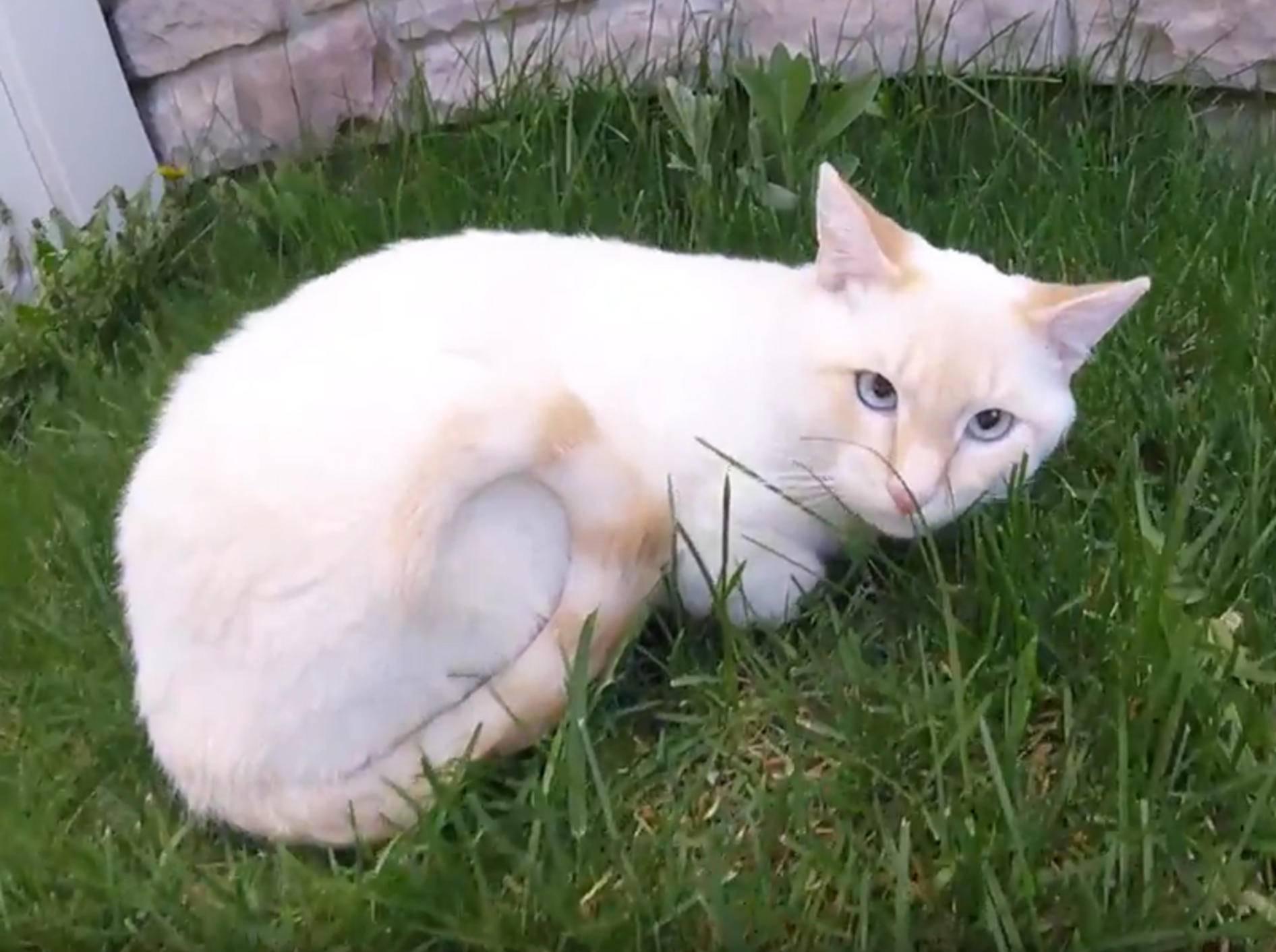 Katerchen Lazarus sieht zum ersten Mal den Frühling – YouTube / Frozen Kitten