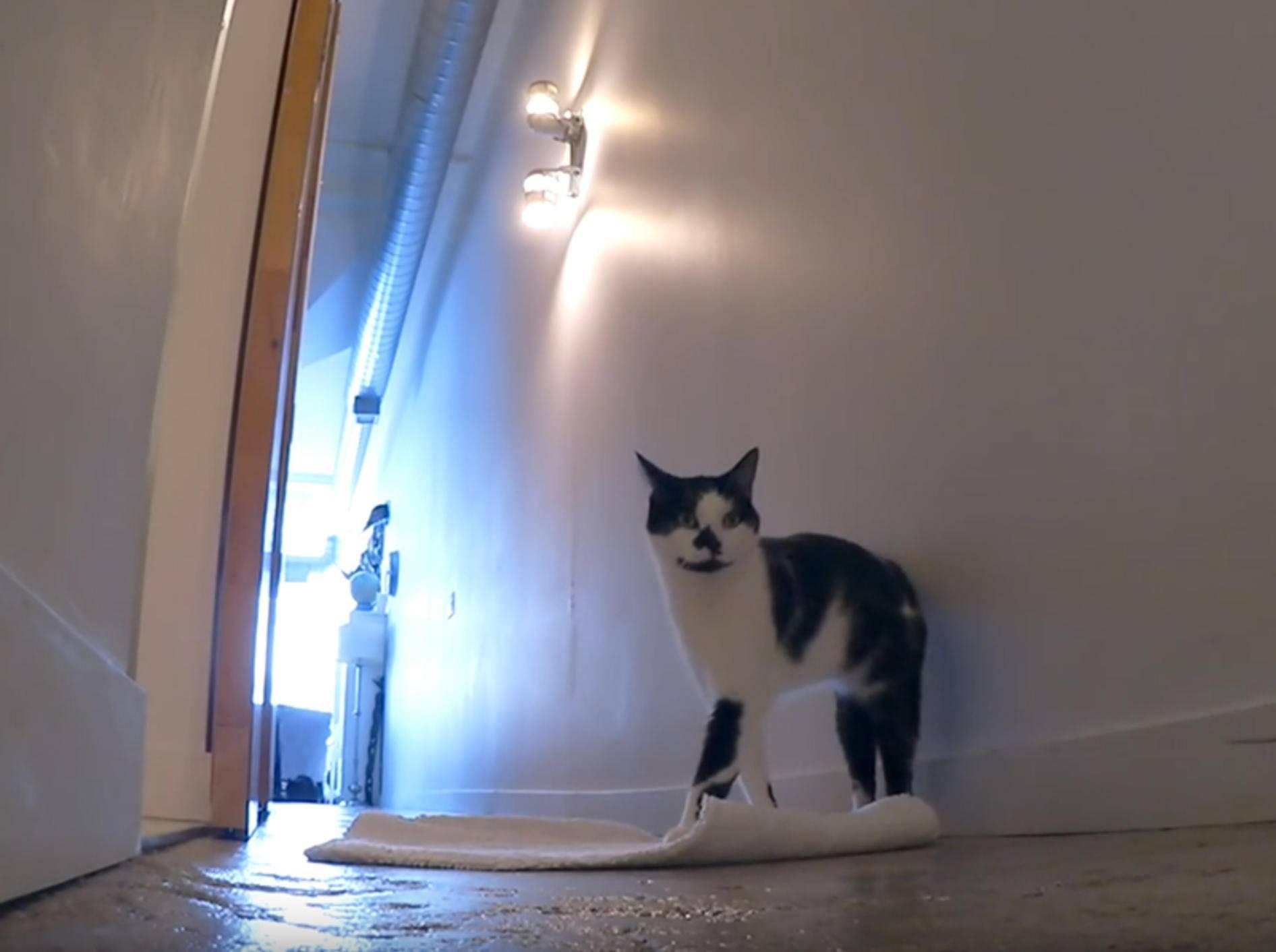 Shorty und Kodi: Katzen geben Tipps zur Katzenberufswahl – YouTube / Sho Ko