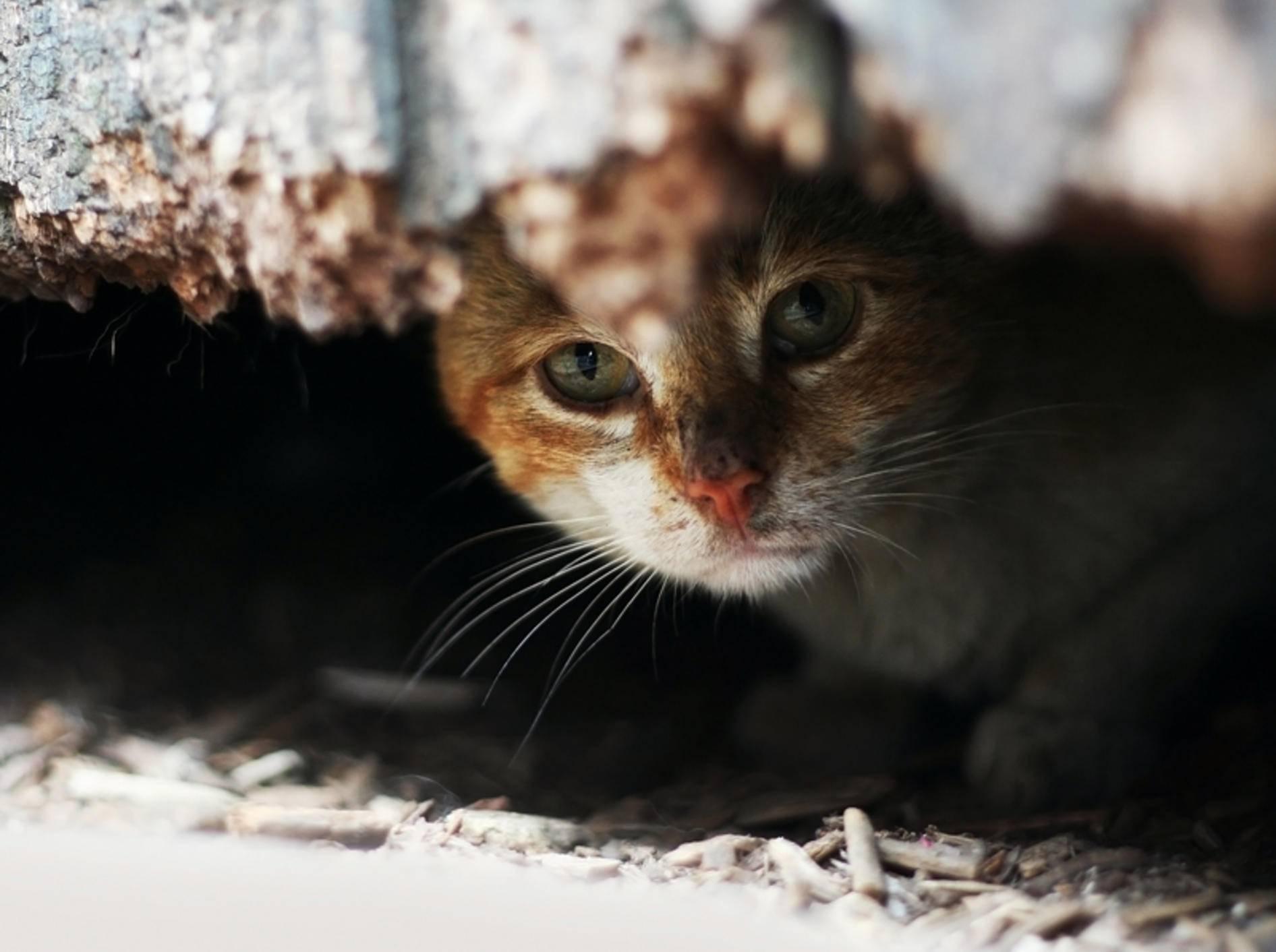 Kranke, geschwächte Katzen ziehen sich manchmal in Verstecke zurück – Shutterstock / Lenar Musin