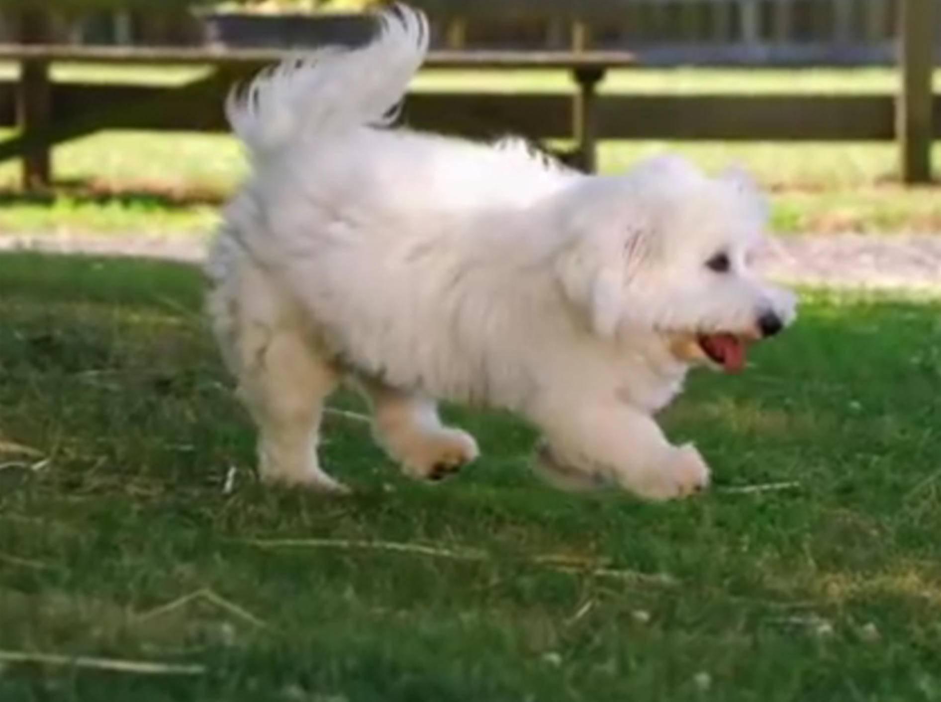 Plüschige Kuschelwelpen-Flauschparade in Zeitlupe – YouTube / Animal Planet