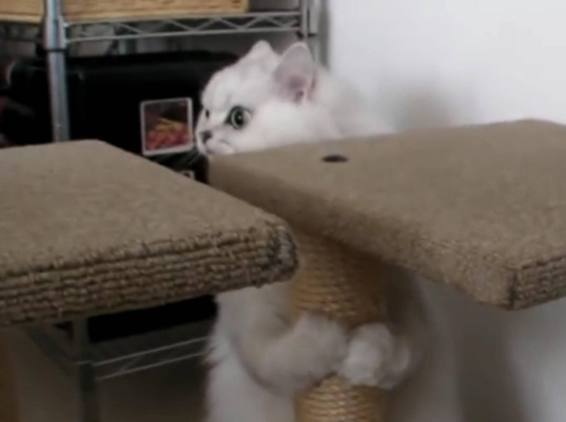 """""""Wer wagt es, mein Spiel zu stören"""", denkt sich die Katze Atom – YouTube / Rumble Viral"""