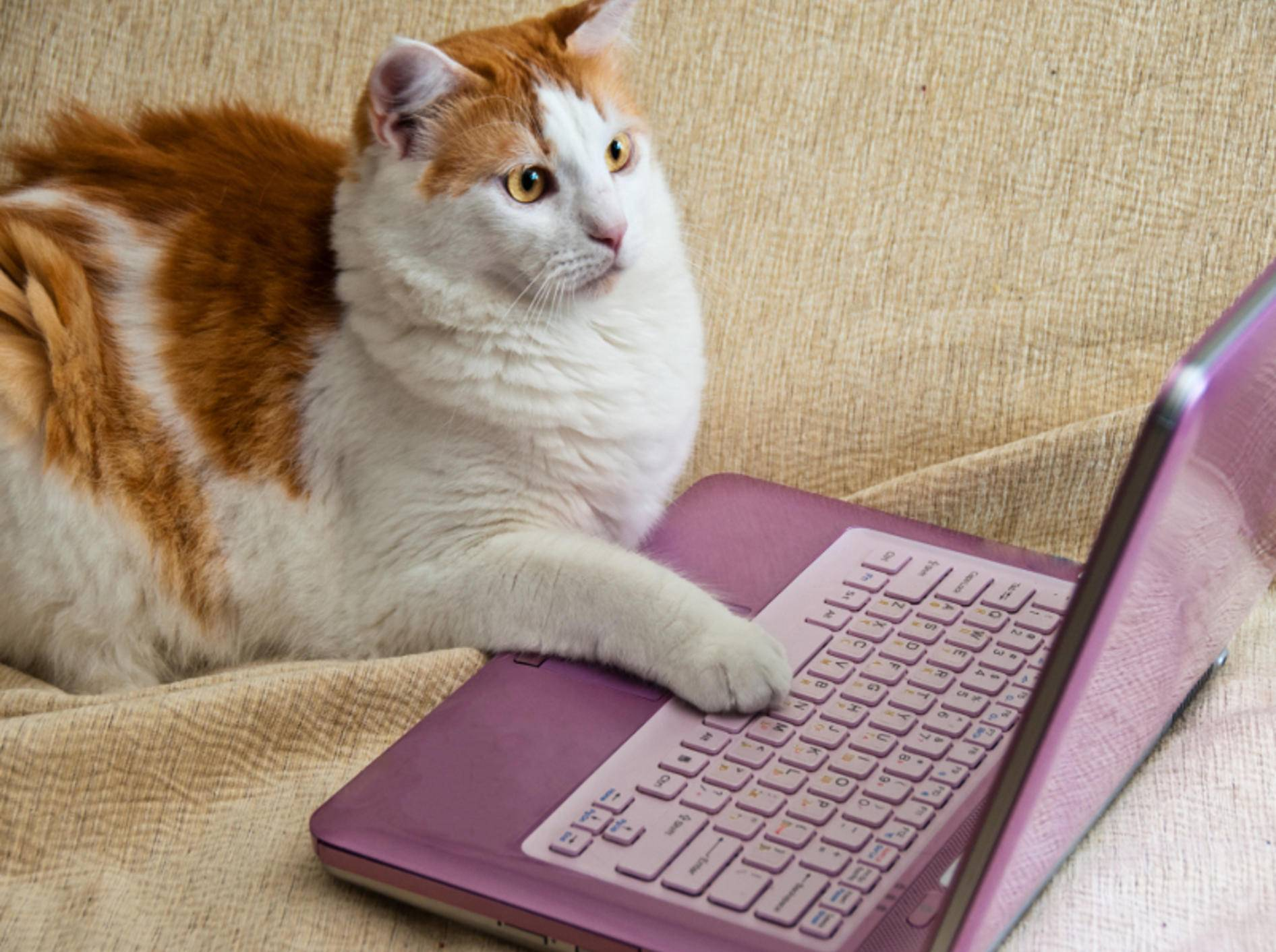 Katzen und Internet – das passt einfach wunderbar zusammen – Shutterstock / ben44