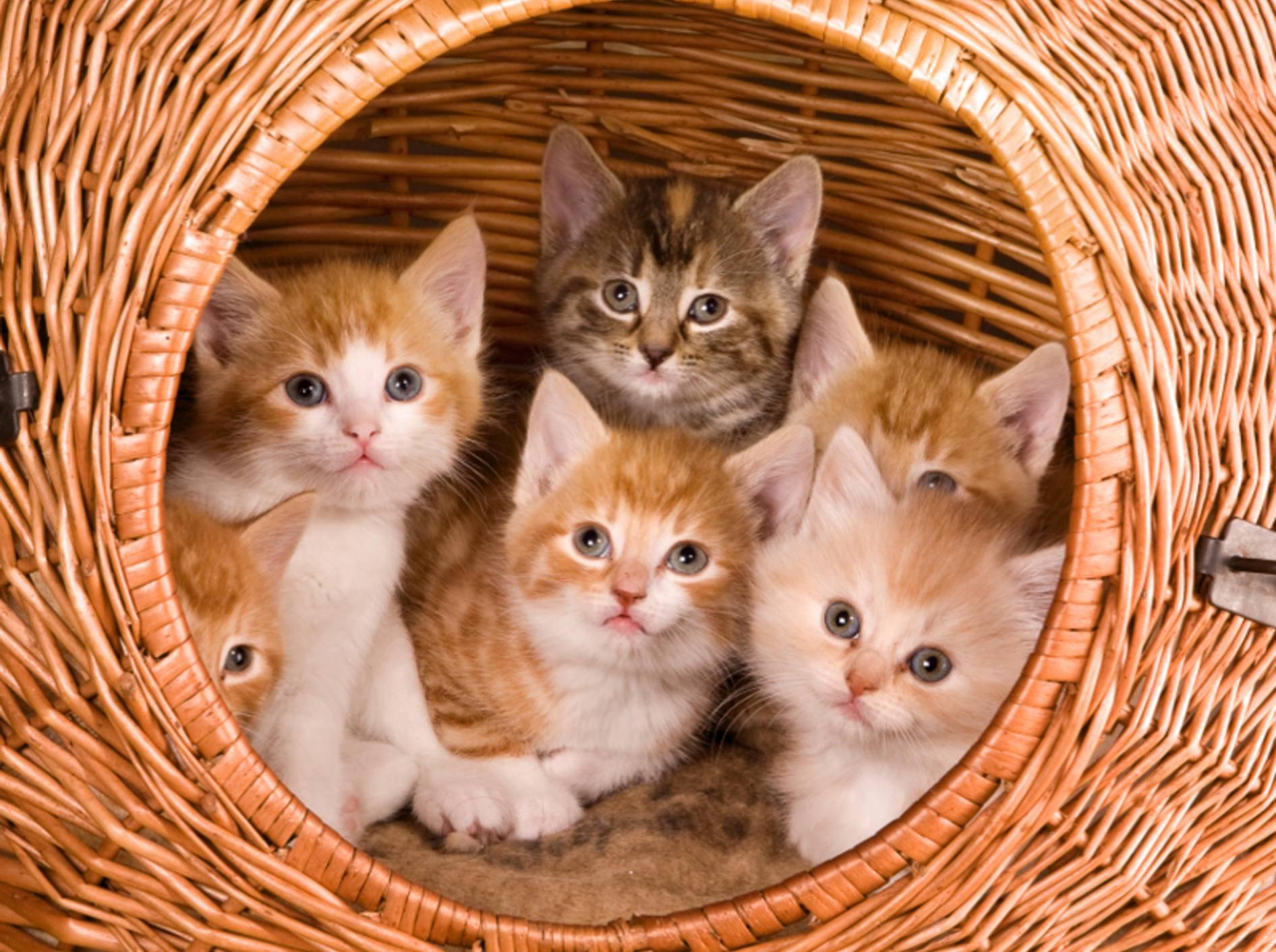 Solche großen Katzenhöhlen sind selten und bieten Platz für mehrere Stubentiger – Shutterstock / Anneka