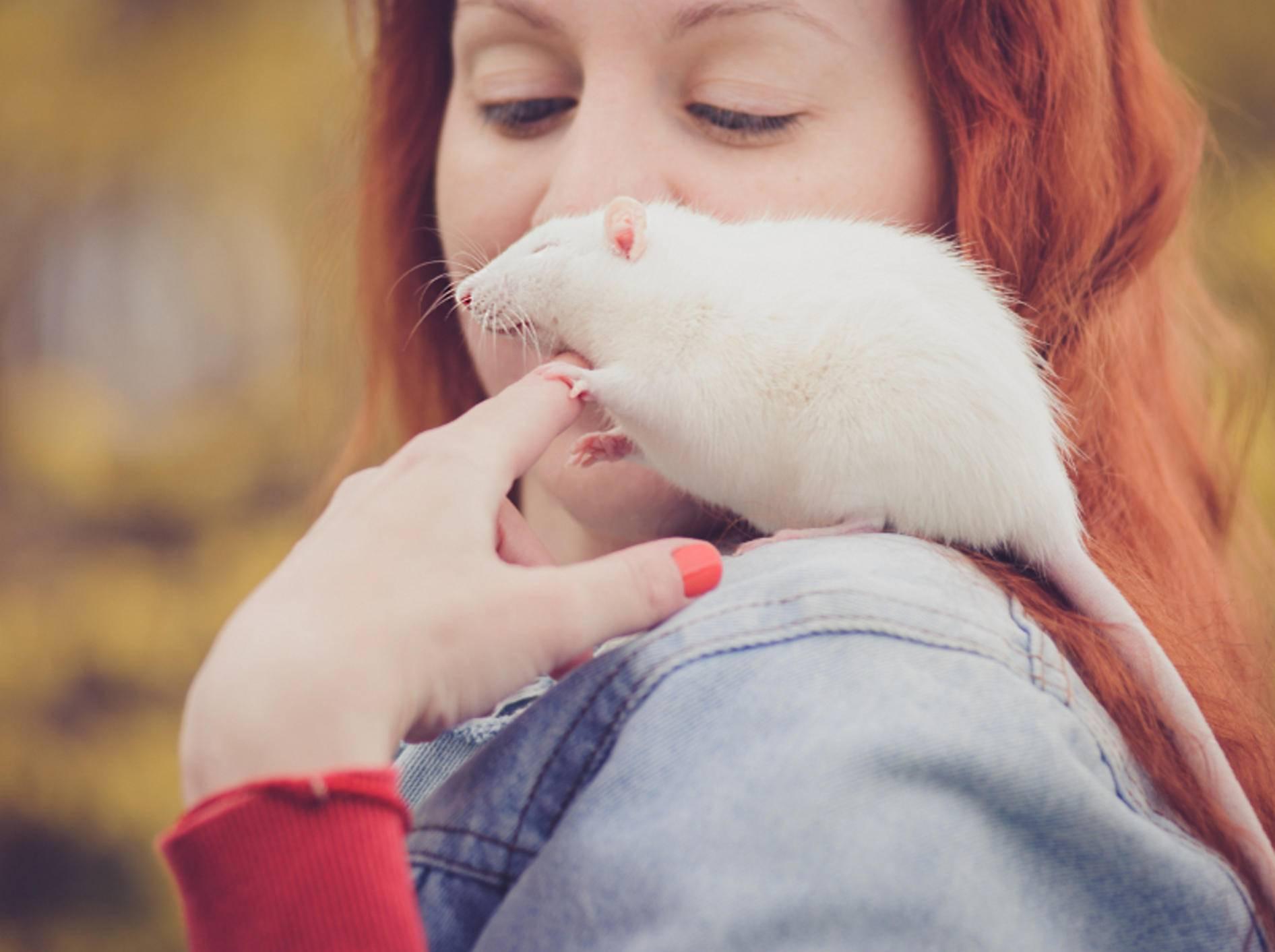 Ratten lieben neue Umgebungen. Sind sie zahm, können Sie mit den Nagern auch nach draußen! – Shutterstock / Darina Matasova