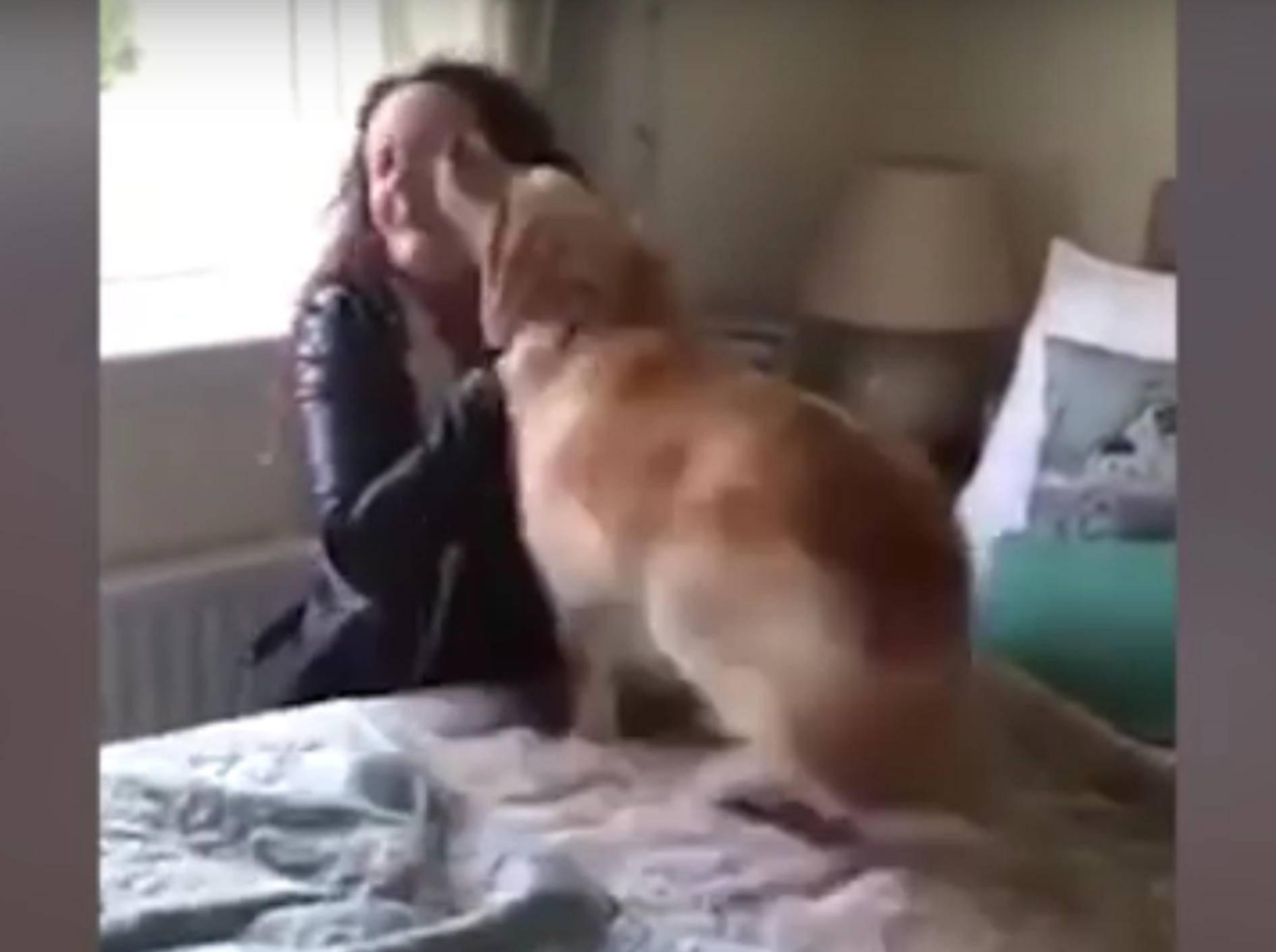 Der Golden Retriever Sandy sieht sein Frauchen nach sieben Monaten wieder und freut sich wie verrückt – YouTube / ABC Television Stations