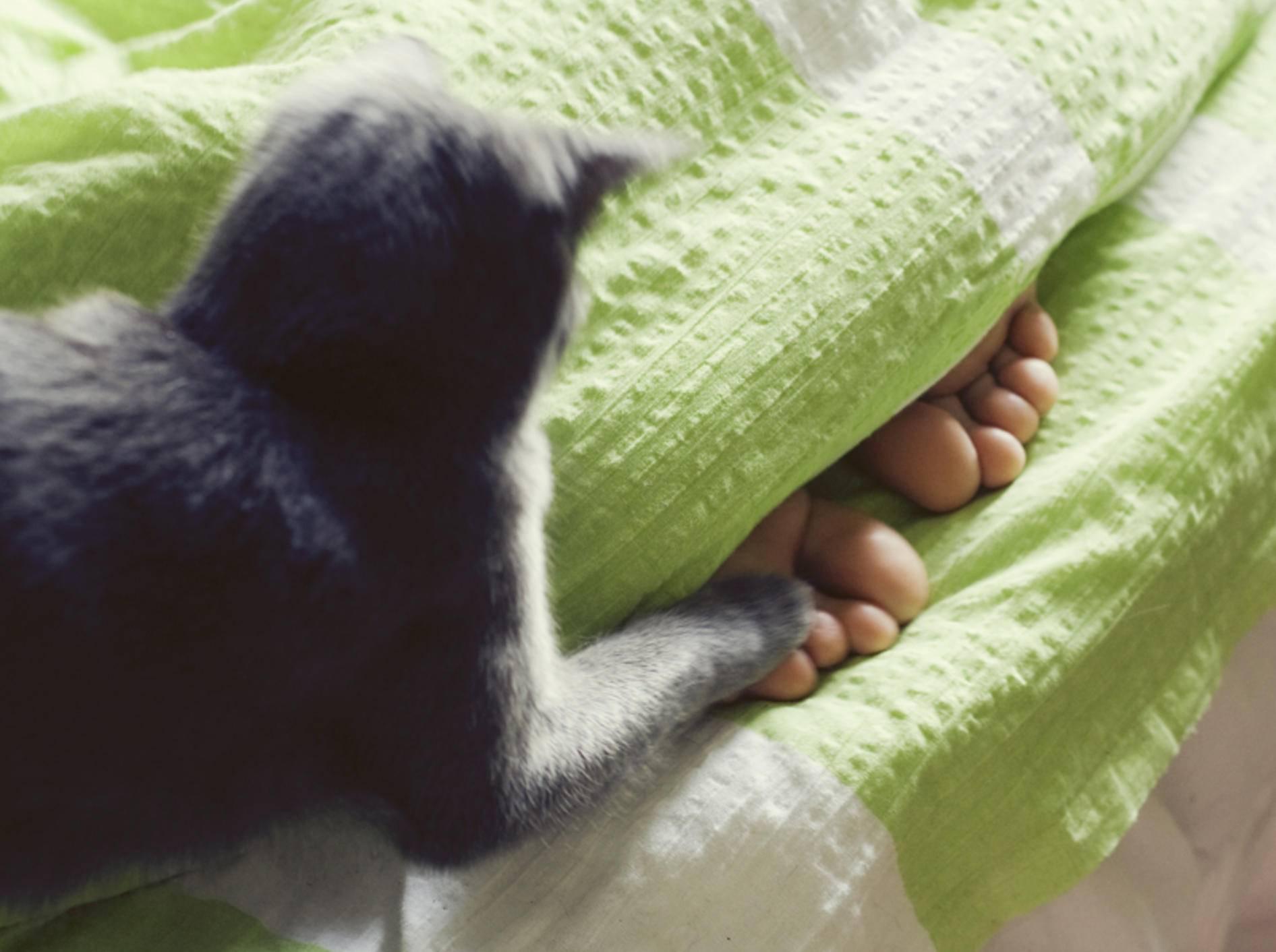 """""""Hab dich!"""": Die kleine Katze hält die Füße unter der Bettdecke für Beute – Shutterstock / Diana Taliun"""