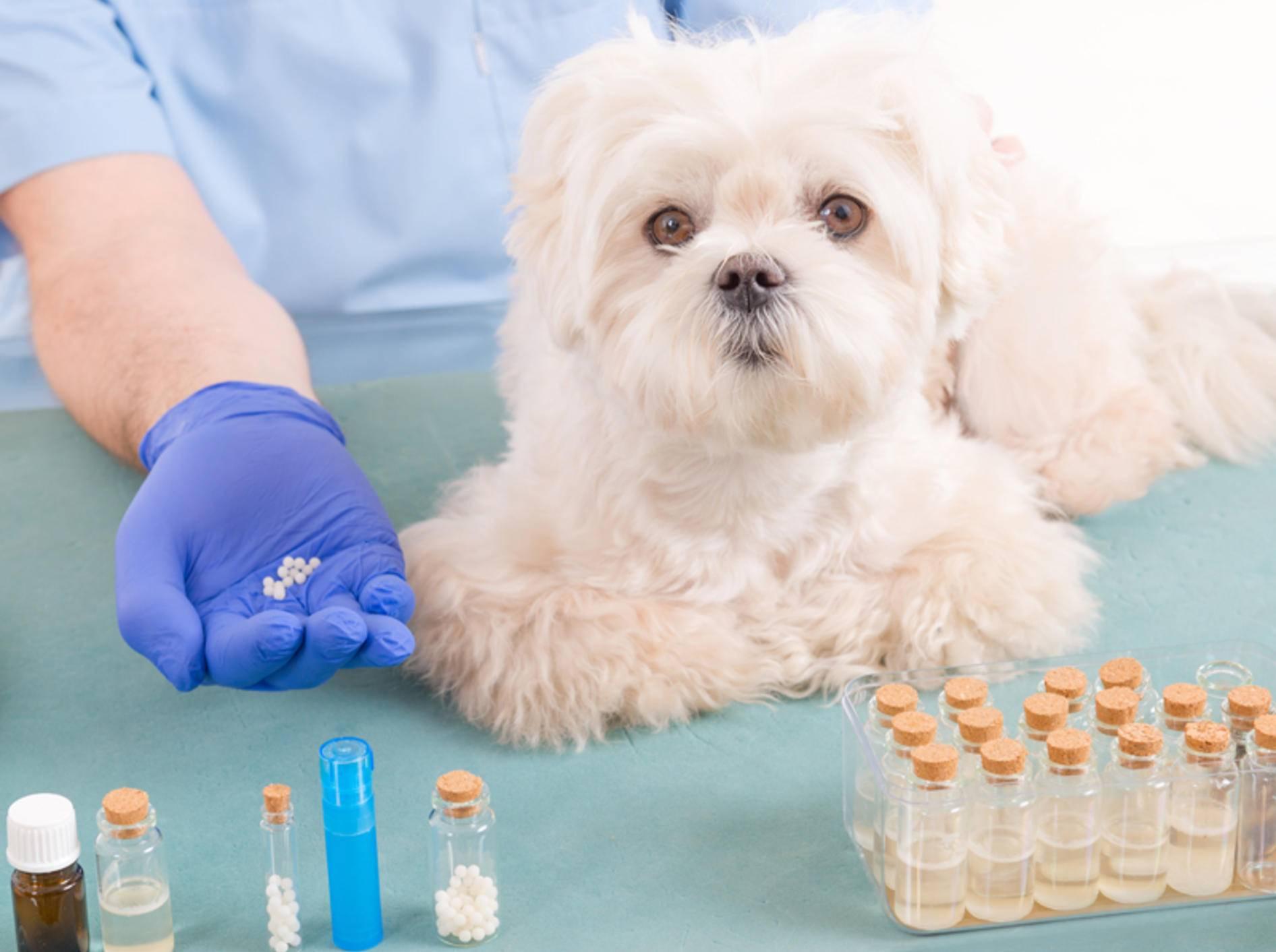 Homöopathische oder pflanzliche Mittel sollten Hunde nie ohne Absprache mit dem Tierarzt einnehmen – Shutterstock / Monika Wisniewska