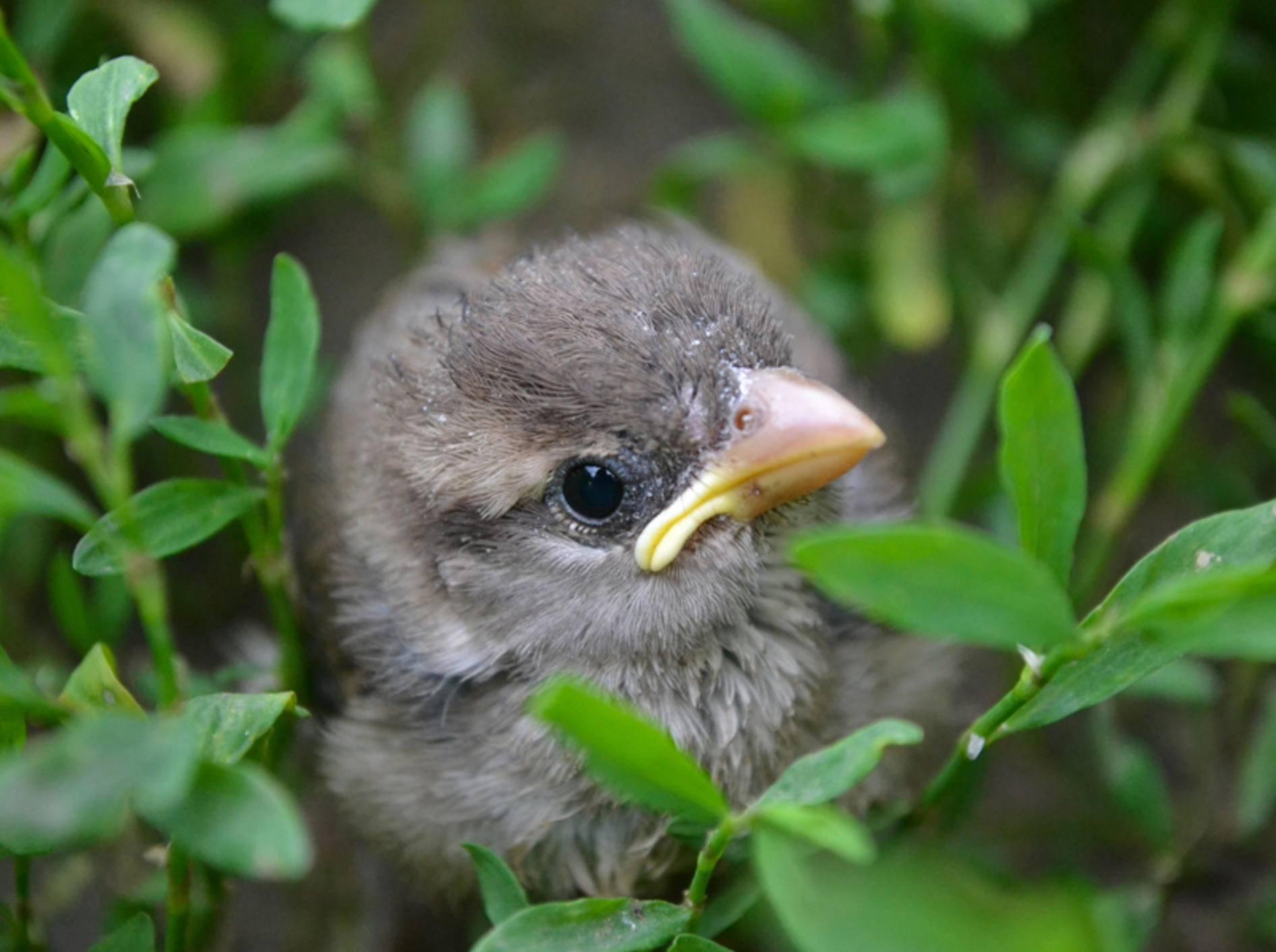 Keine Sorge, kleiner Vogel, im Gebüsch bist du sicher, bis deine Mama zum Füttern kommt – Shutterstock / Andrew Iurciuc