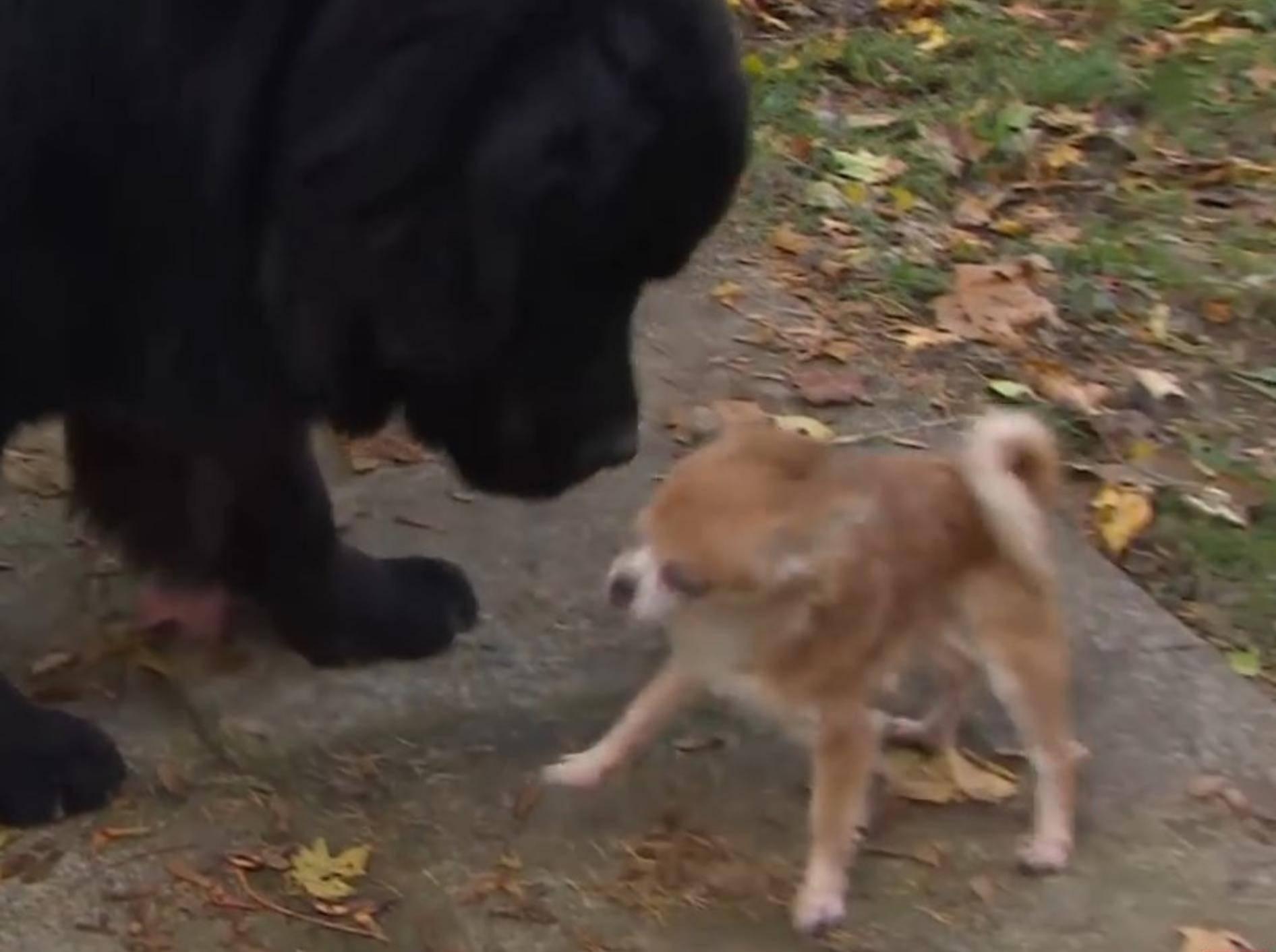 Klein und Groß – Carly und Silas sind richtig dicke Freunde – YouTube / CBC NEWS