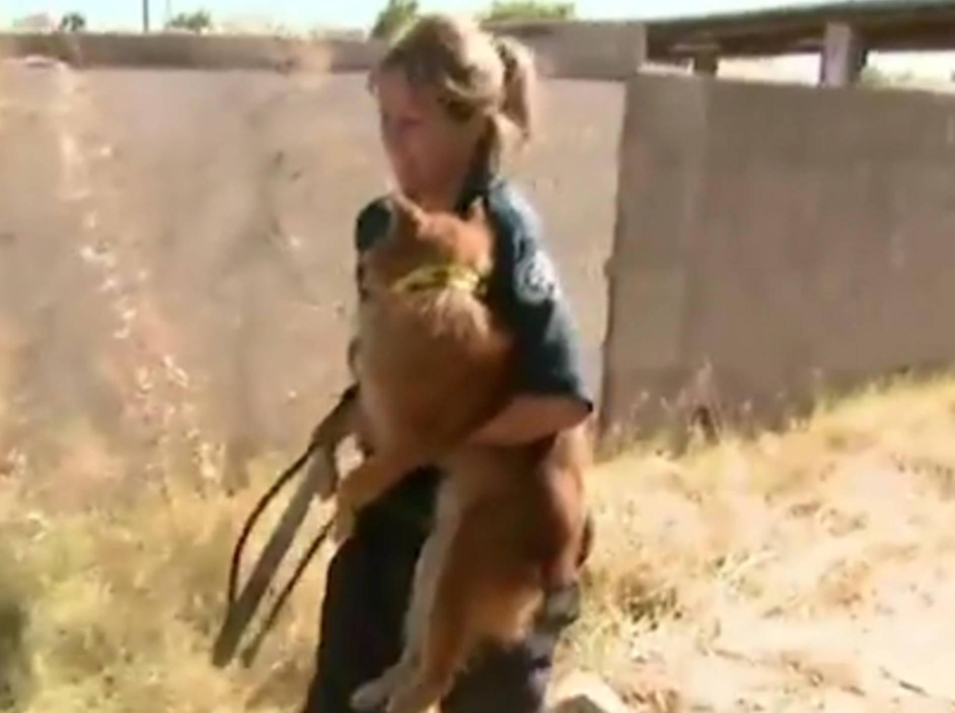 Dank der Hilfe von Tierorganisationen und mutigen Helfern, können einige Straßenhunde gerettet werden – YouTube / The Dodo
