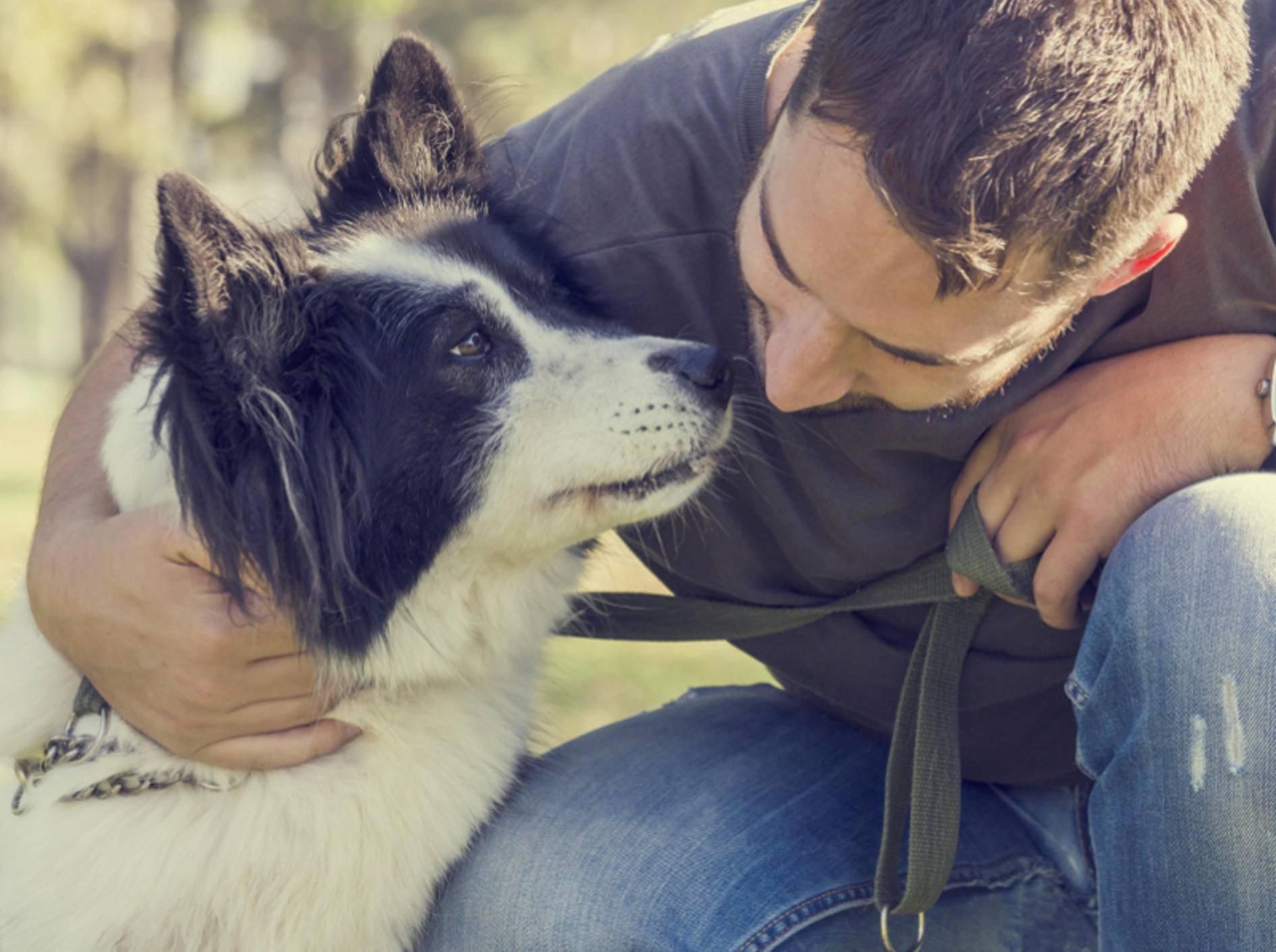 """""""Ich hab dich lieb, Mensch!"""", scheint dieser Hund ganz sentimental sagen zu möchten – Shutterstock / Hitdelight"""