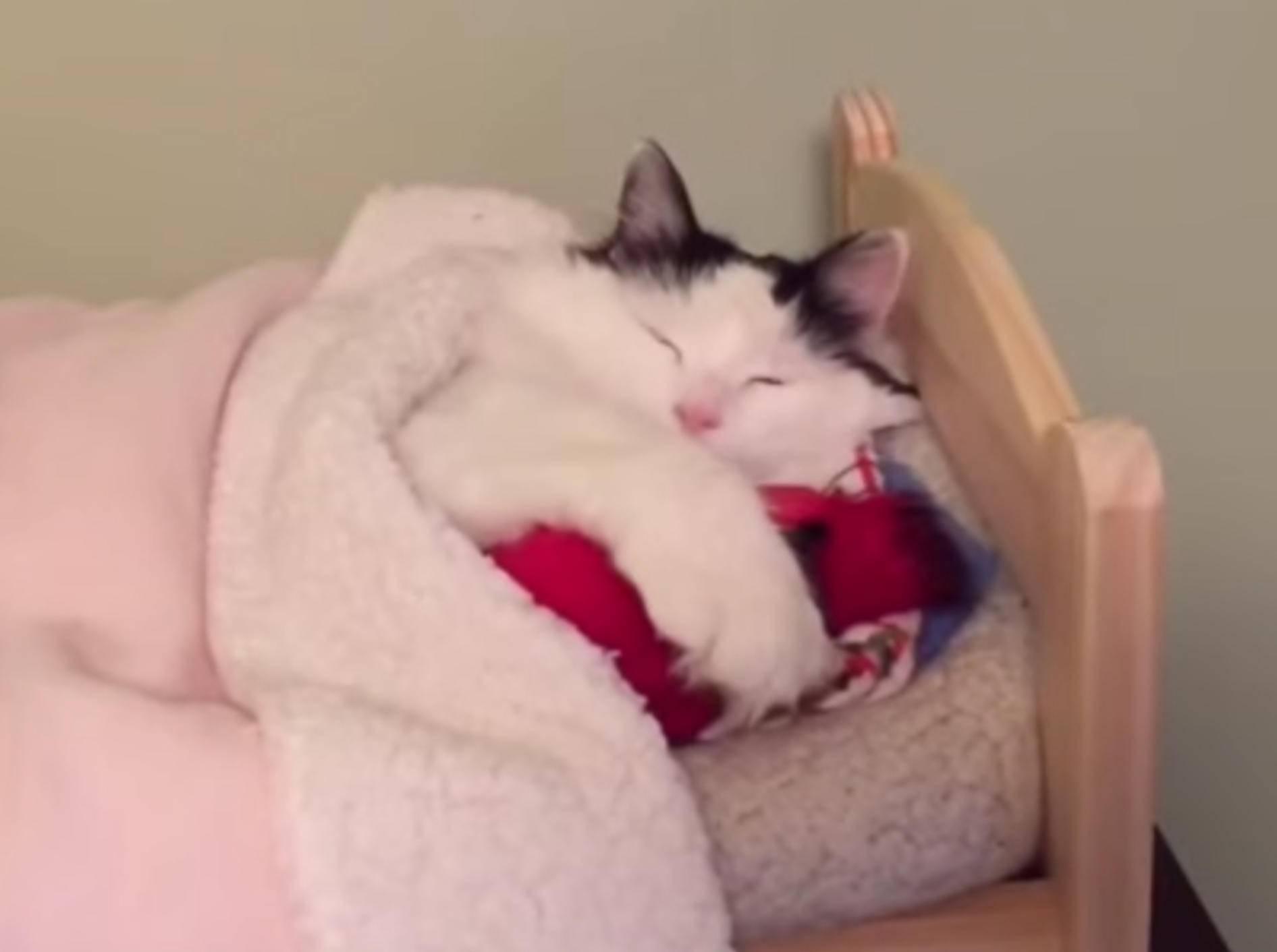 So niedlich schläft die Katze Sophie in einem richtigen Menschenbett – im Miniformat – YouTube / Sophielovestuna
