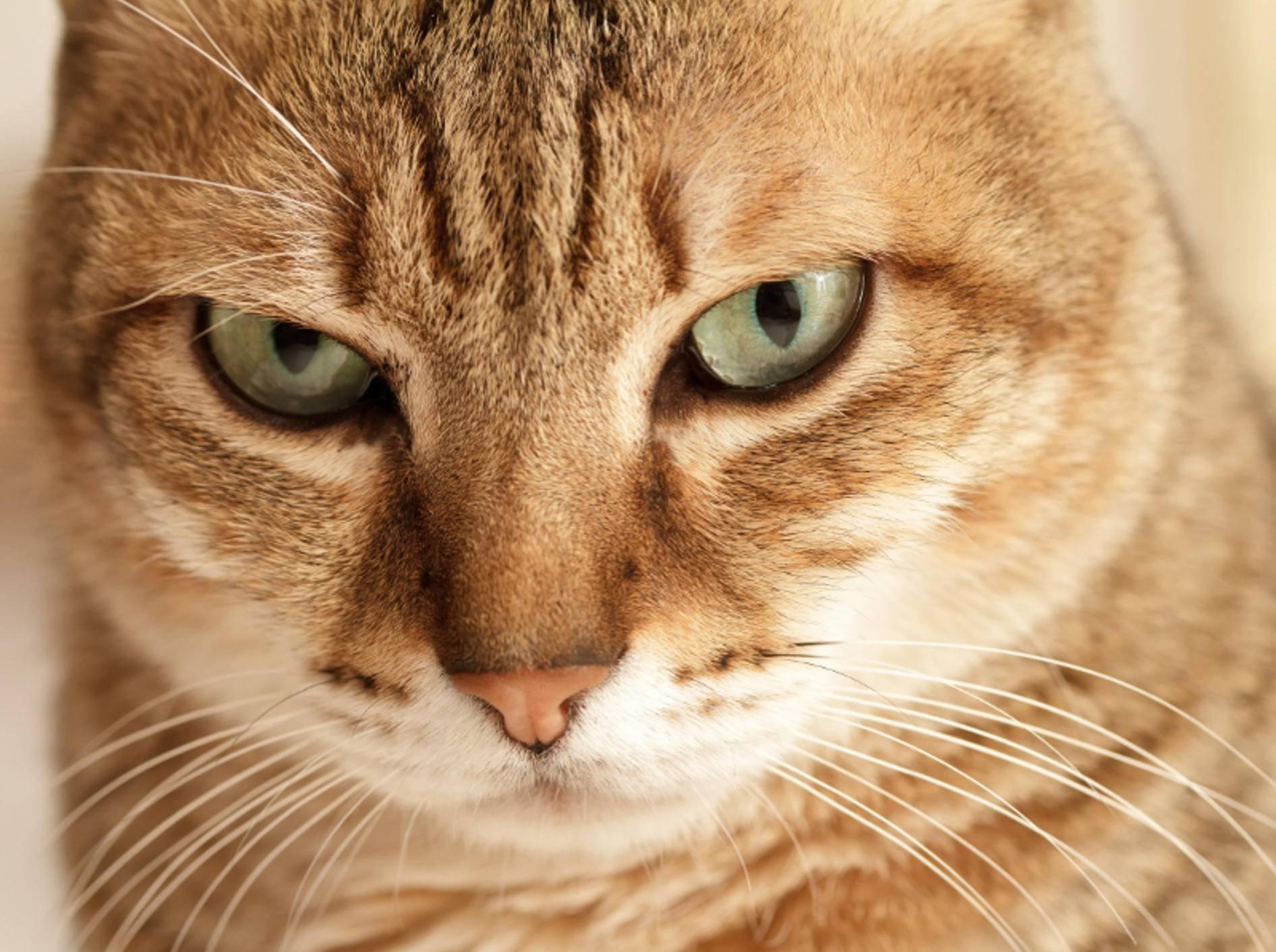 """""""Physik? Ursache und Wirkung? Alles kein Problem für mich"""", scheint diese Katze zu denken – Shutterstock / elwynn"""