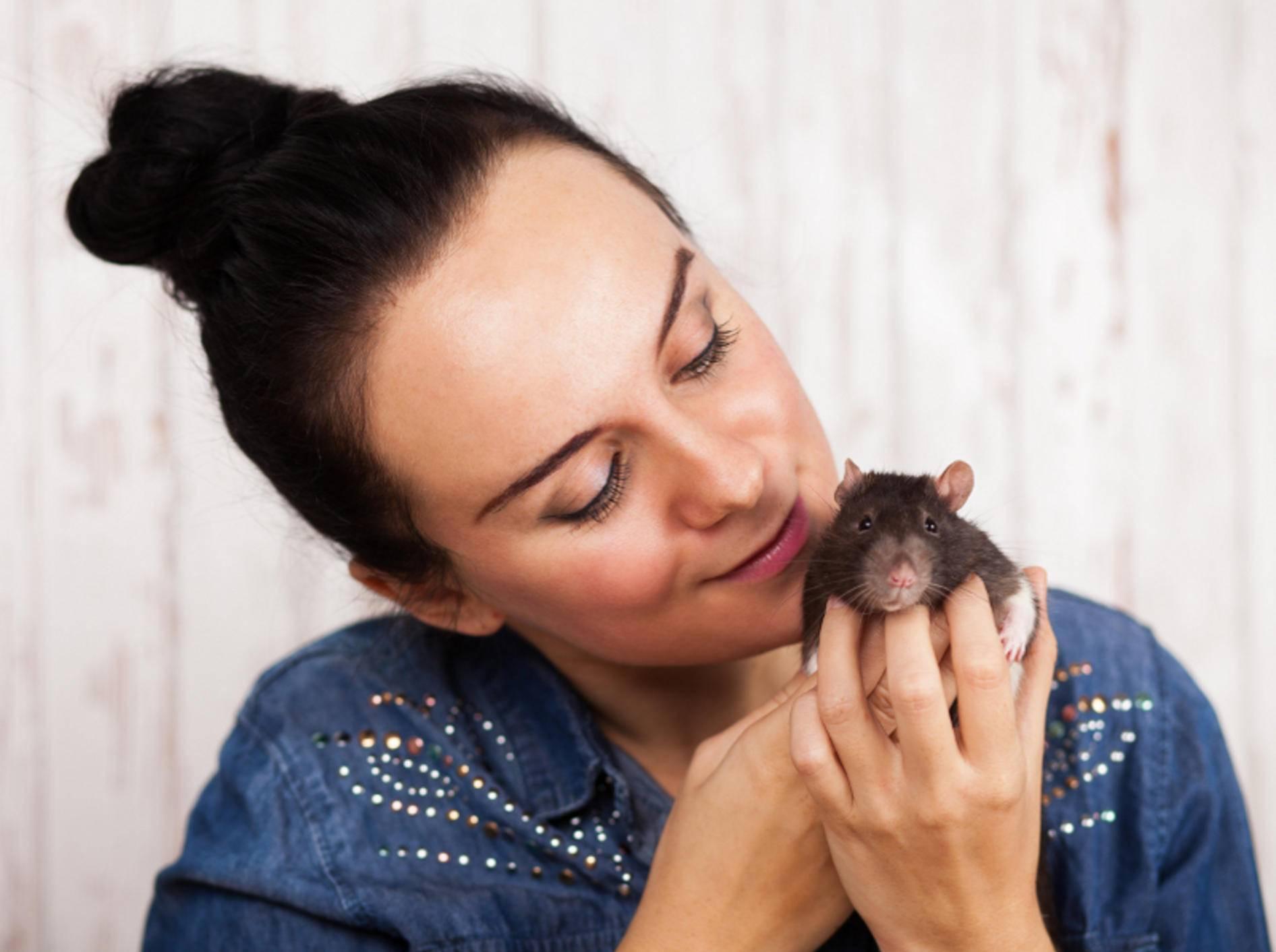 Wenn Ihre Ratten es mögen: Streicheleinheiten sind ebenfalls sehr wichtig für die Nager – Shutterstock / George Dolgikh