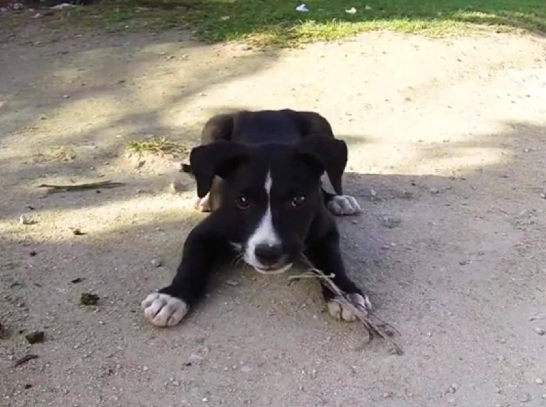 Berührungsängste? Nein, dieser kubanische Welpe spielt sofort mit seinen neuen Freunden – YouTube / Rumble Viral