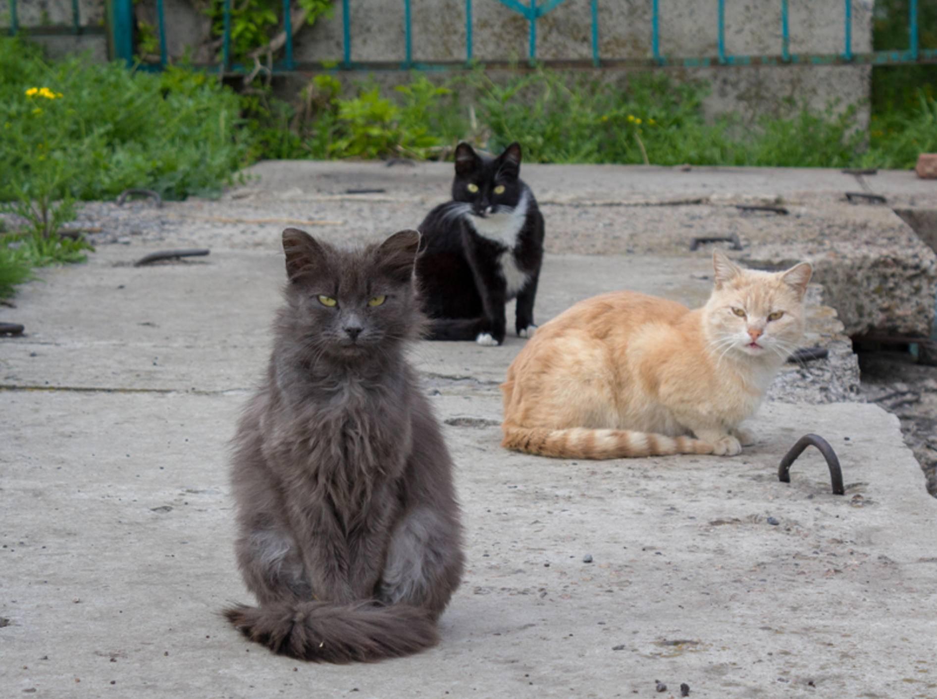 Wer ist hier der Boss? Die Hierarchie in Katzengruppen ist flexibel und ziemlich komplex – Shutterstock / DmyTo