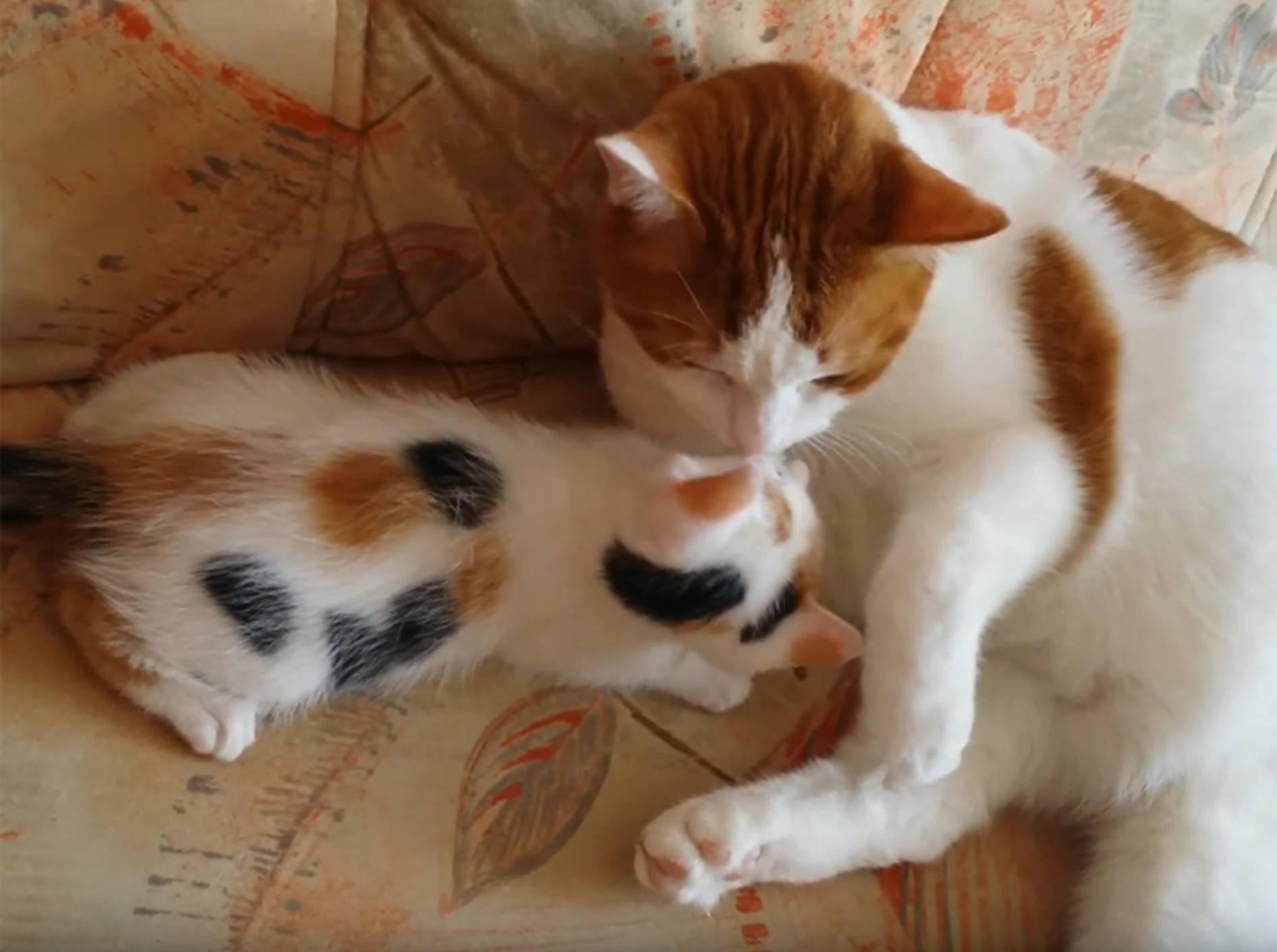 Glückskätzchen Lunny kuschelt mit Katzenkumpel Spaarky – YouTube / Silke Schloten